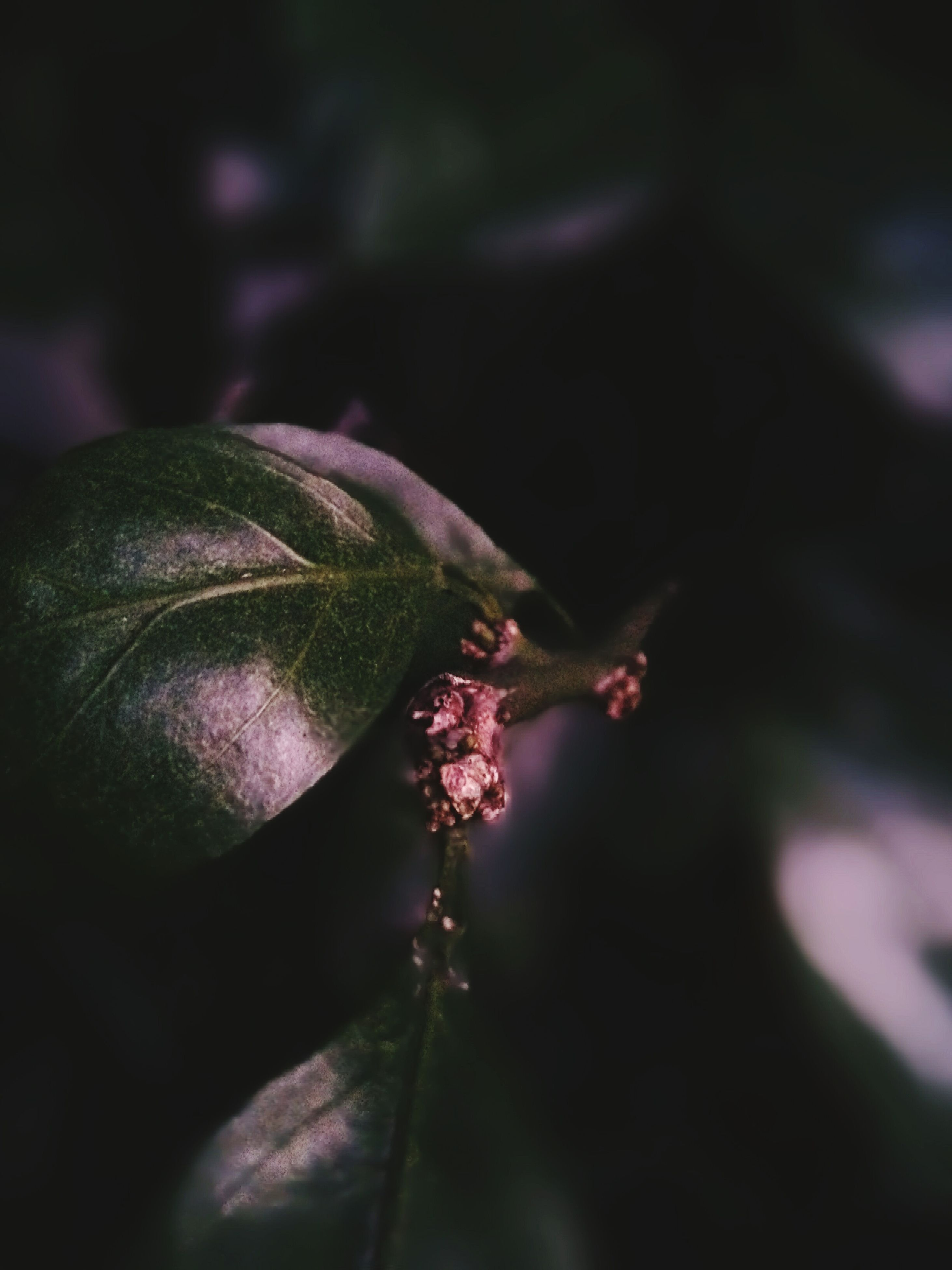 flower, growth, close-up, fragility, plant, focus on foreground, freshness, nature, stem, bud, beauty in nature, selective focus, leaf, new life, beginnings, green color, outdoors, insect, one animal, petal