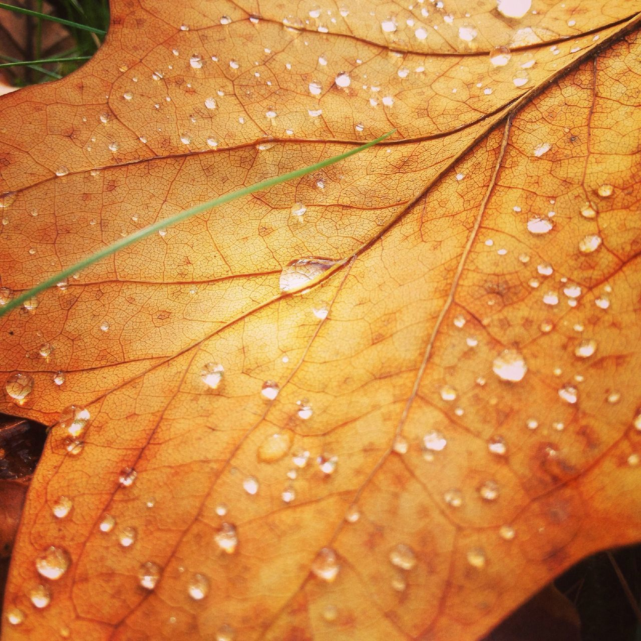 Leaves Autumn Autumn Colors Wet