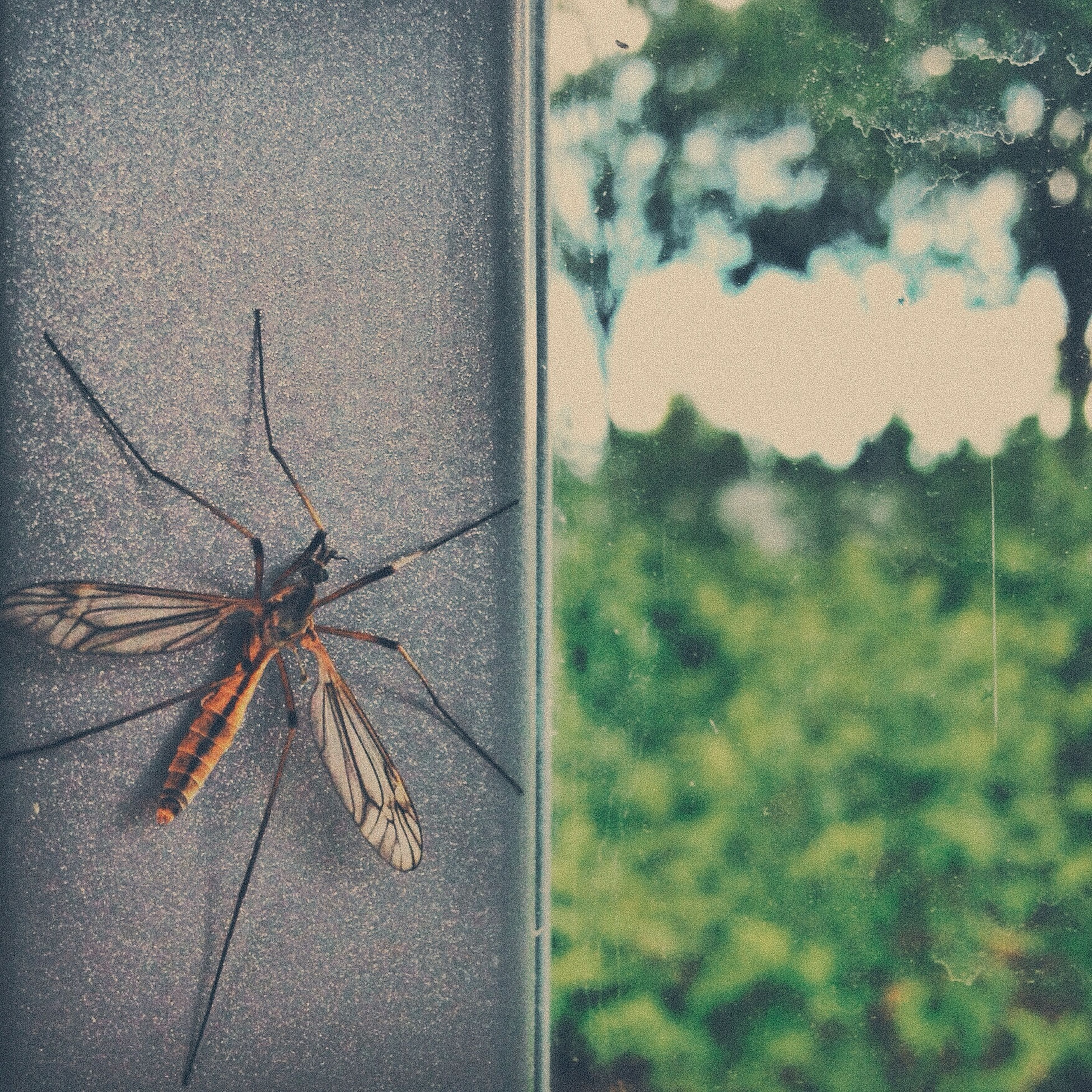 insect, animal themes, close-up, wall - building feature, one animal, animals in the wild, spider, day, outdoors, wildlife, high angle view, no people, window, spider web, death, damaged, nature, built structure, the end, textured