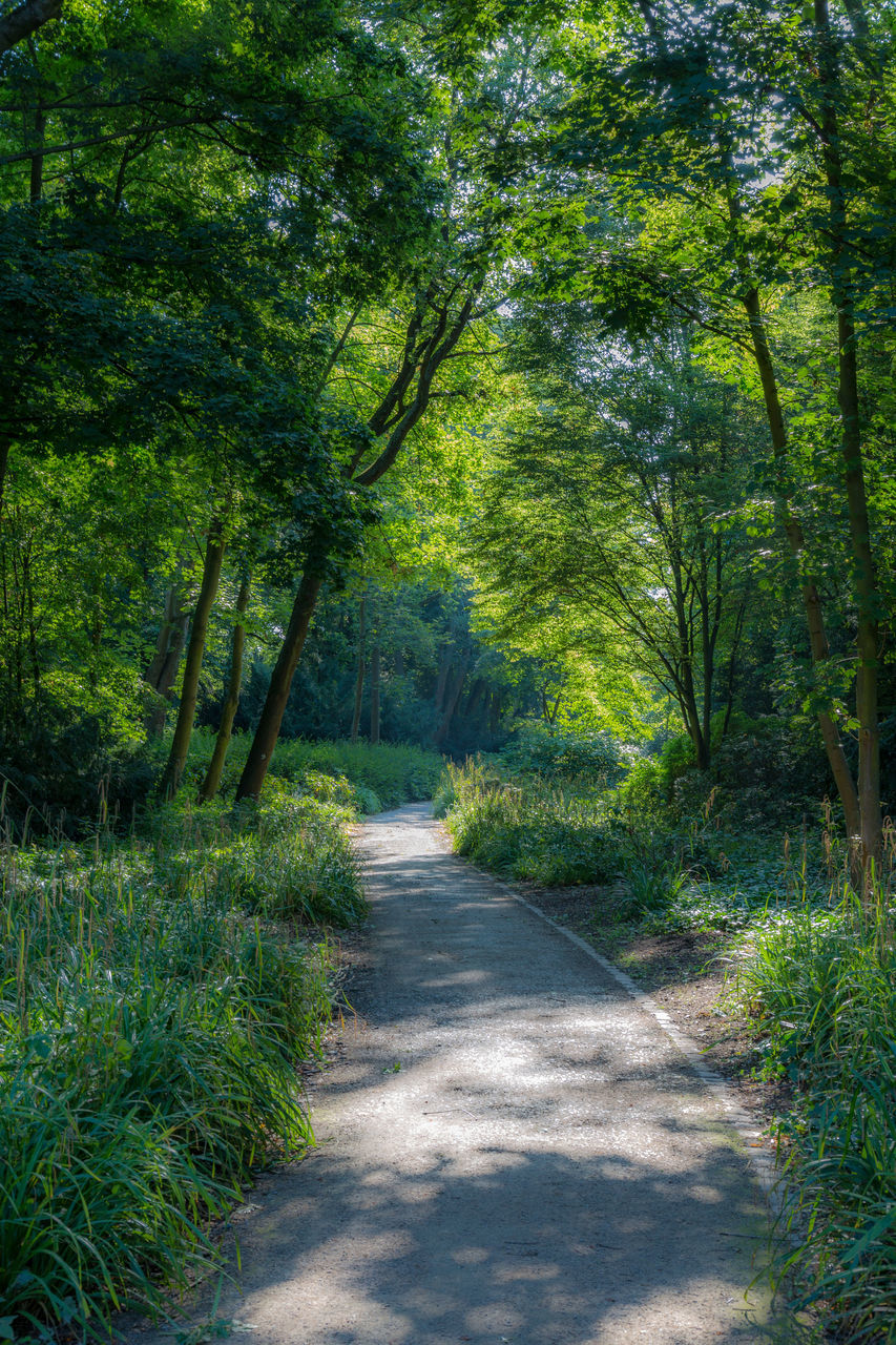 tree, nature, footpath, sunlight, scenics, shadow, the way forward, tranquil scene, forest, road, summer, outdoors, day, landscape, plant, woodland, curve, tranquility, rural scene, single lane road, no people, grass, beauty in nature