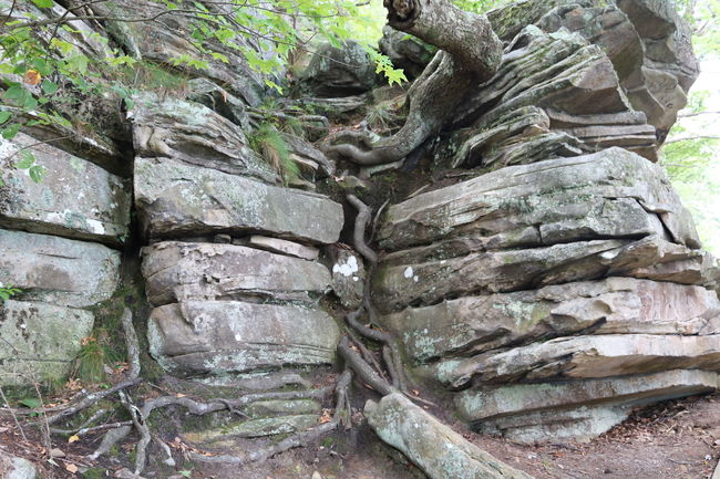 Beauty In Nature Cannon Close-up Full Frame Green Green Color Growth Lookout Mountain Moss Mountain View National Park Nature No People Outdoors Overgrown Point Park Chattanooga, Tennessee River River View Rock - Object Rock Formation Root Surface Level Tranquility Tree Trunk Weathered
