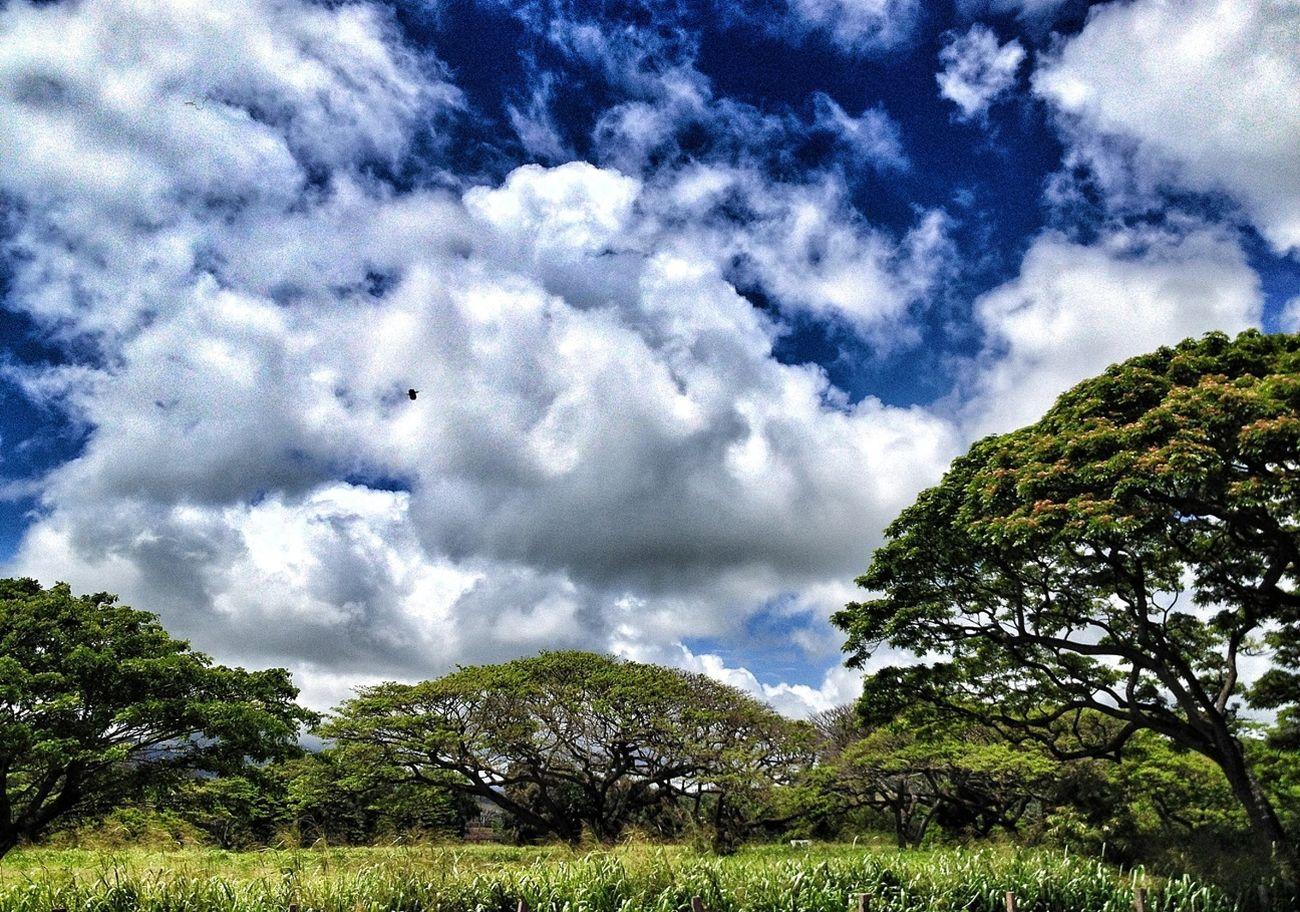 Clouds And Sky Hawaii Kauai Koloa Town