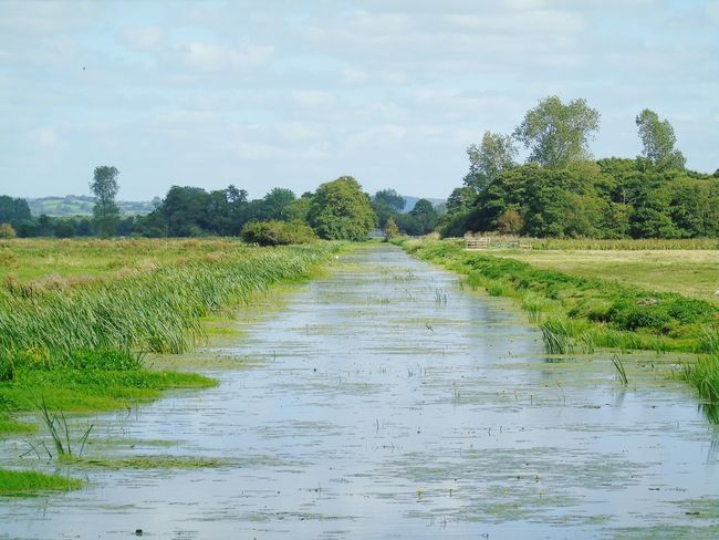 Tree Water Tranquility Sky Nature Grass Beauty In Nature Somerset Levels Uk In All Its Glory Nature On Your Doorstep Riverbank Diminishing Perspective Field Green Color Outdoors