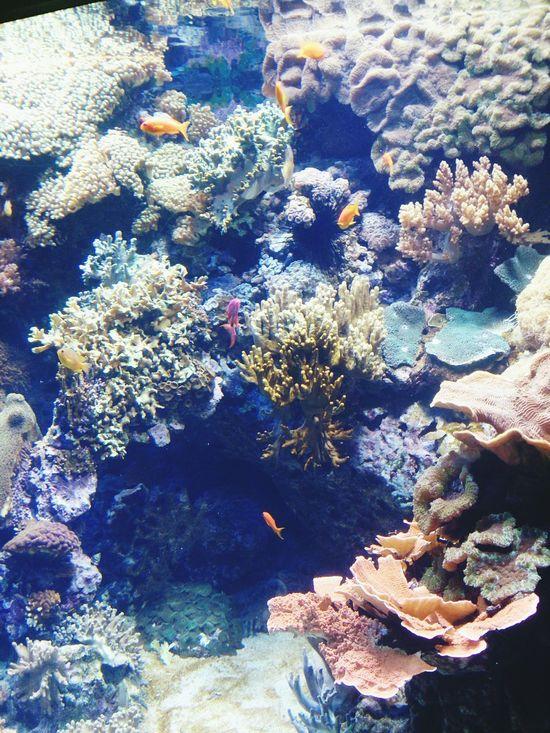 Rocky Reef Exponate Oceanário De Lisboa Lisboa Lisbon