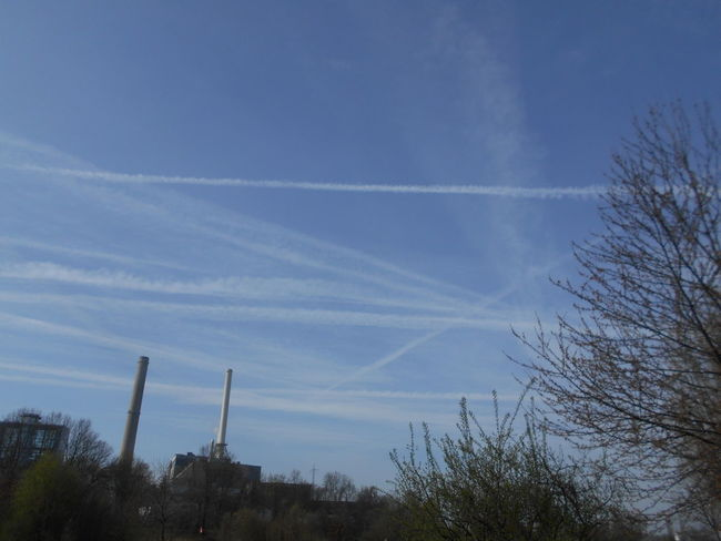 Beauty In Nature Contrail Day Low Angle View Nature No People Outdoors Scenics Sky Tree Vapor Trail