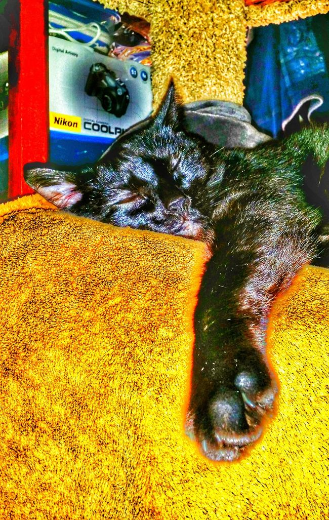 Freedom sleeping on my towelsorry her towel Domestic Animals Pets Sleeping Pampered Pets Black Color For The Love Of Photography Animal Themes Black Cat Head Shot Domestic Cat Cat Black My Love Black Cat PhotographyAdopt To Save A Life The Journey Is The Destination