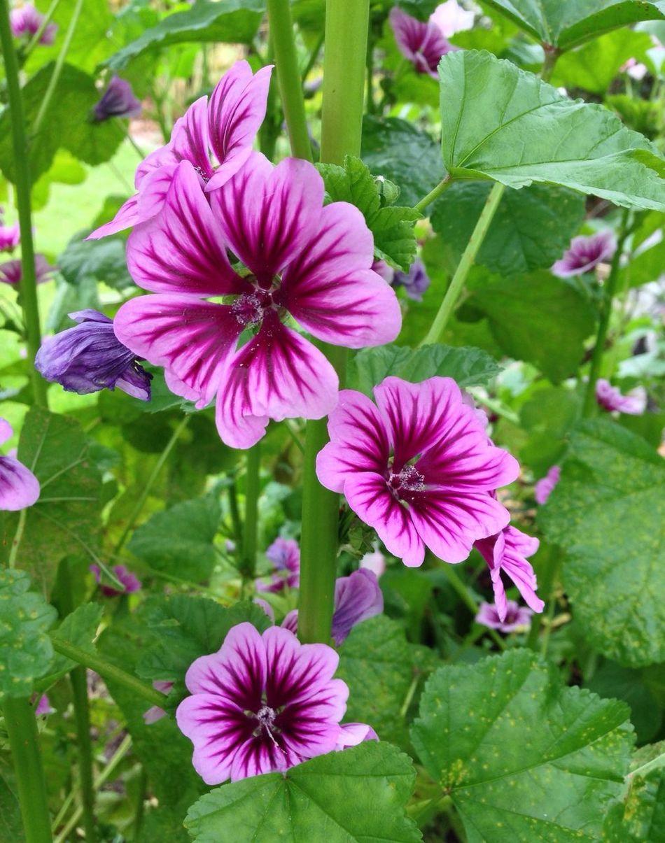 Denmark In My Garden 2