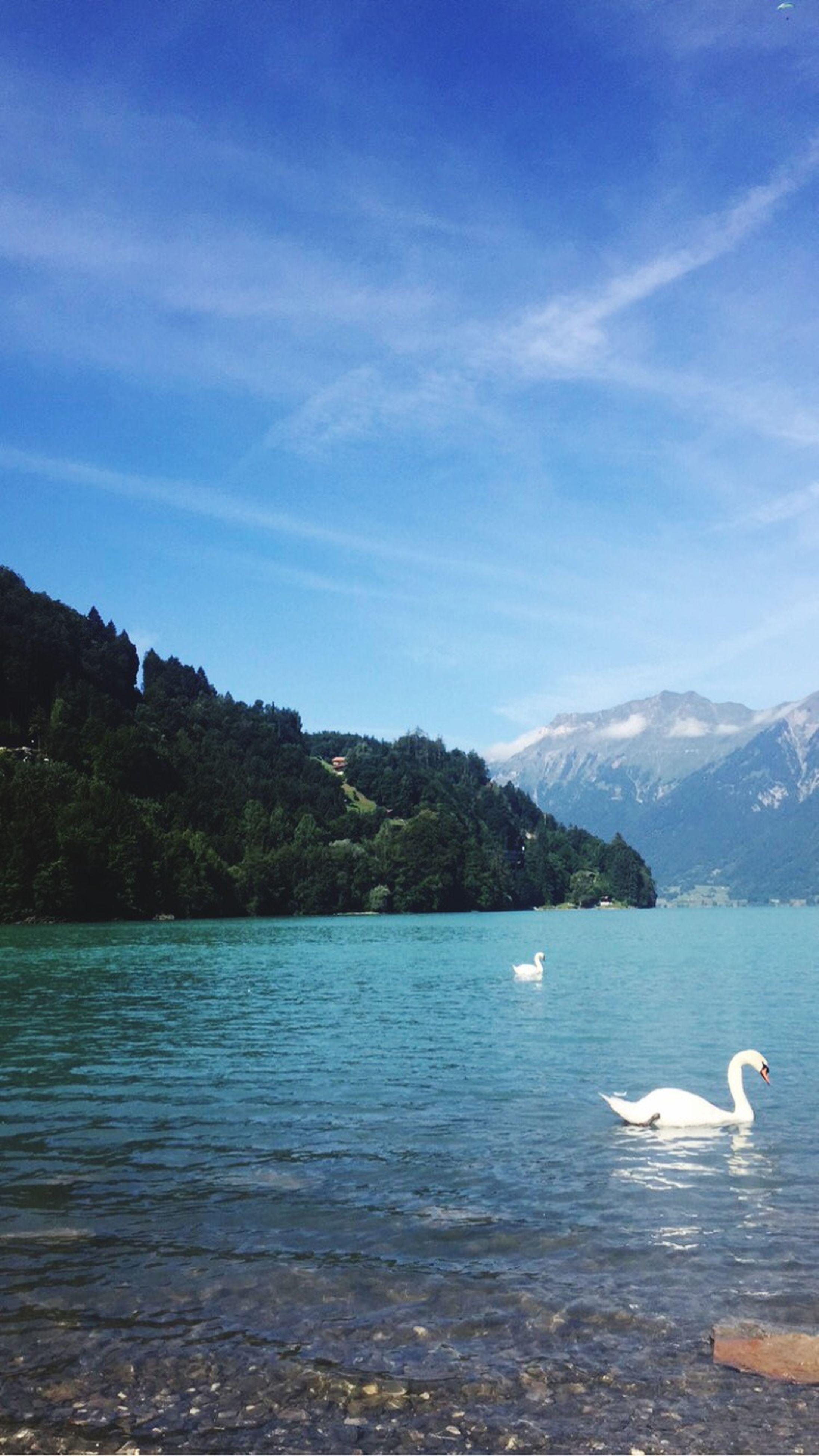 water, bird, animal themes, mountain, lake, animals in the wild, wildlife, tranquil scene, waterfront, scenics, tranquility, sky, beauty in nature, mountain range, swimming, nature, rippled, blue, swan, idyllic