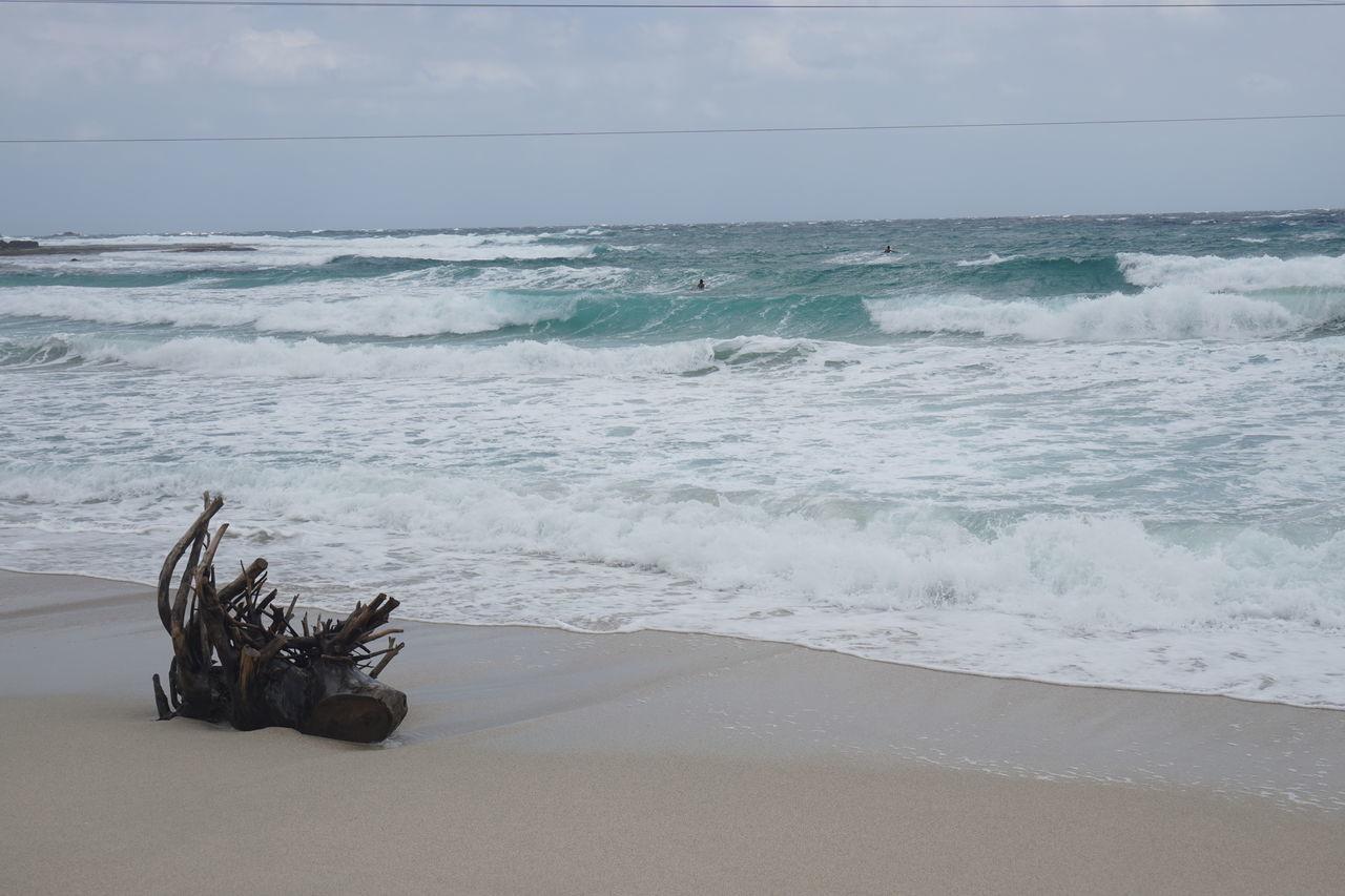 Beach Beach No Peaple Beauty In Nature Drift Wood On Beach Drifwood Fine Beach Sand Horizon Over Water Sand Sea Shore Tranquility Wave