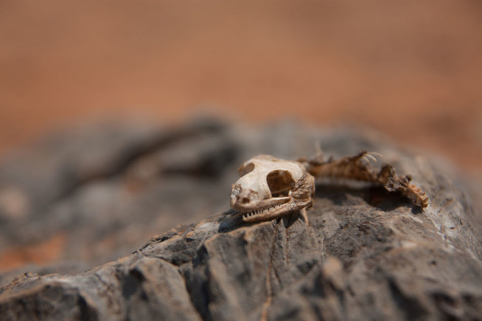 Beautiful stock photos of death, Animal Bone, Animal Skull, Animal Themes, Day