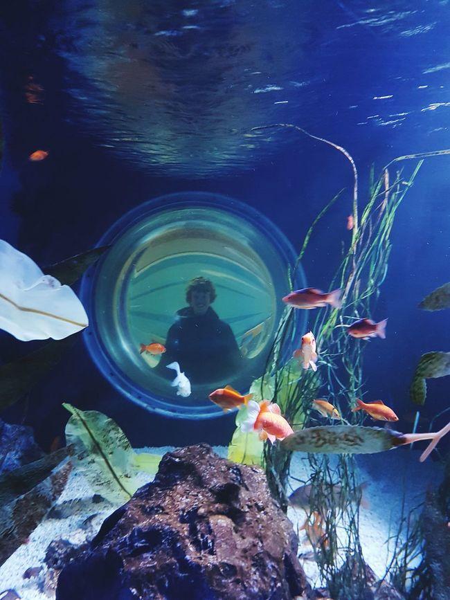 Underwater Water Fish Aquarium Life Say Hello Weekend Activities