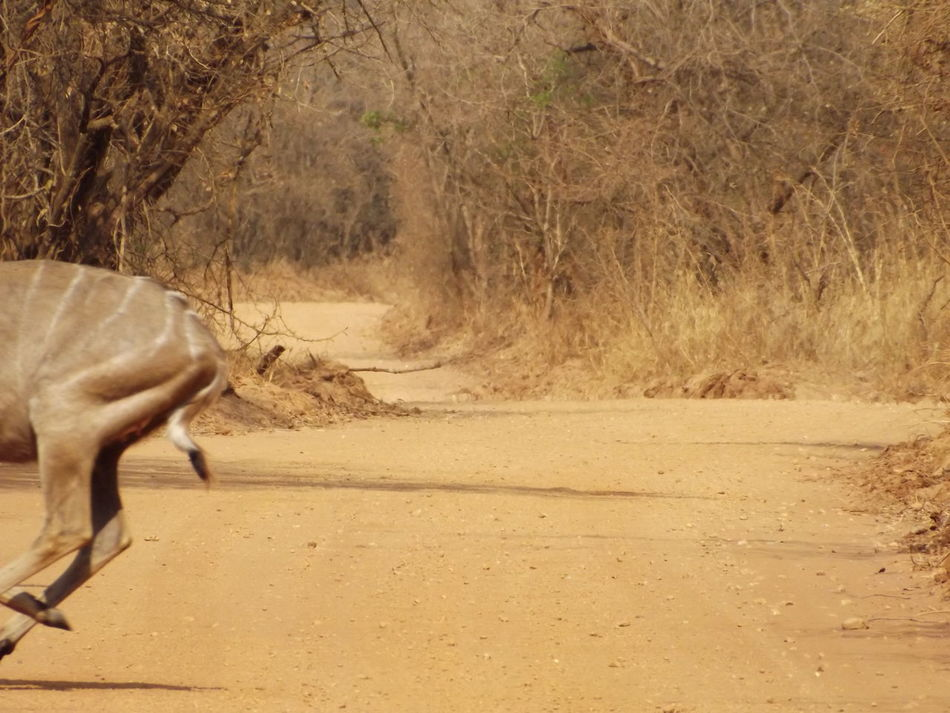 I enjoy a good fail photo, damn those things move fast! Somewhere in Zambia Photo Fail Zambia Glitch Photography In Motion Safari Safari Animals Speed