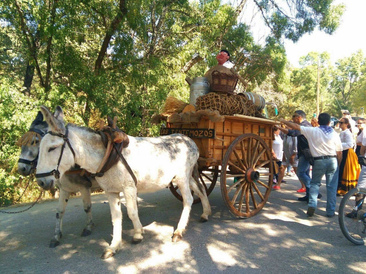 horse, working animal, animal themes, horse cart, horsedrawn, domestic animals, mammal, carriage, transportation, tree, livestock, riding, outdoors, day, real people, full length, nature, one person, people