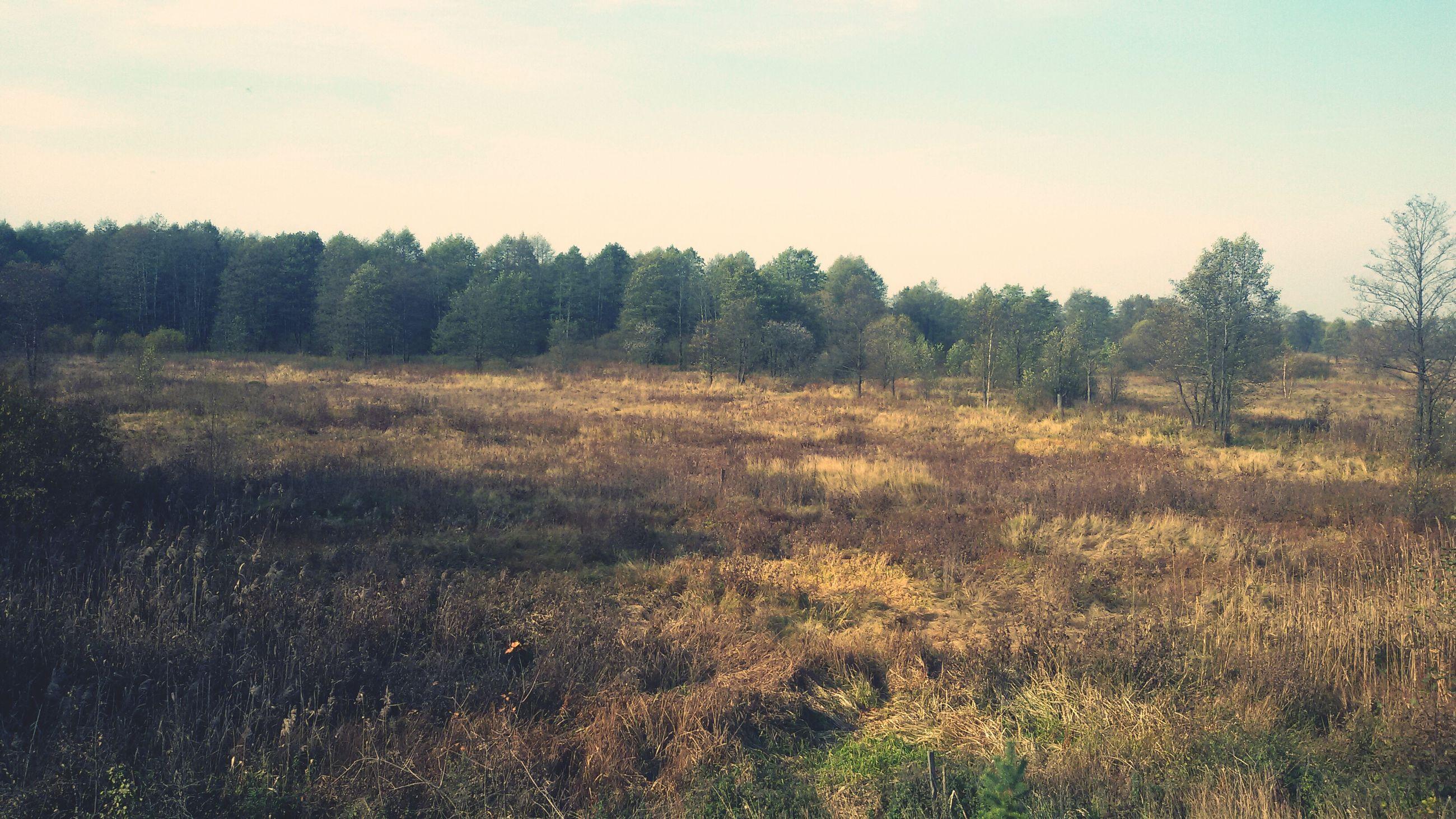 tranquil scene, tranquility, tree, landscape, field, growth, scenics, beauty in nature, grass, nature, clear sky, sky, plant, non-urban scene, forest, copy space, idyllic, grassy, remote, non urban scene