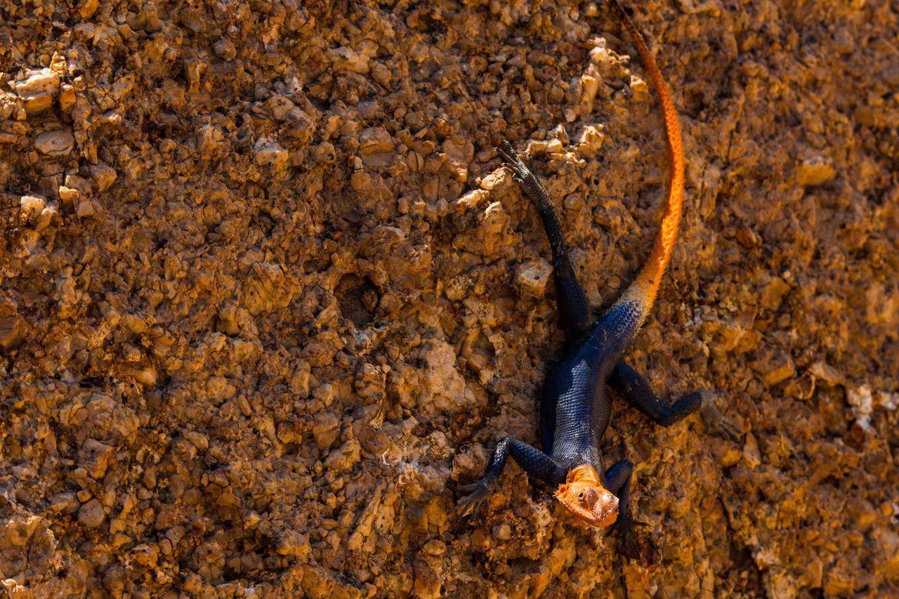 Beautiful stock photos of krokodil,  Animal Themes,  Animal Wildlife,  Animals In The Wild,  Beauty In Nature