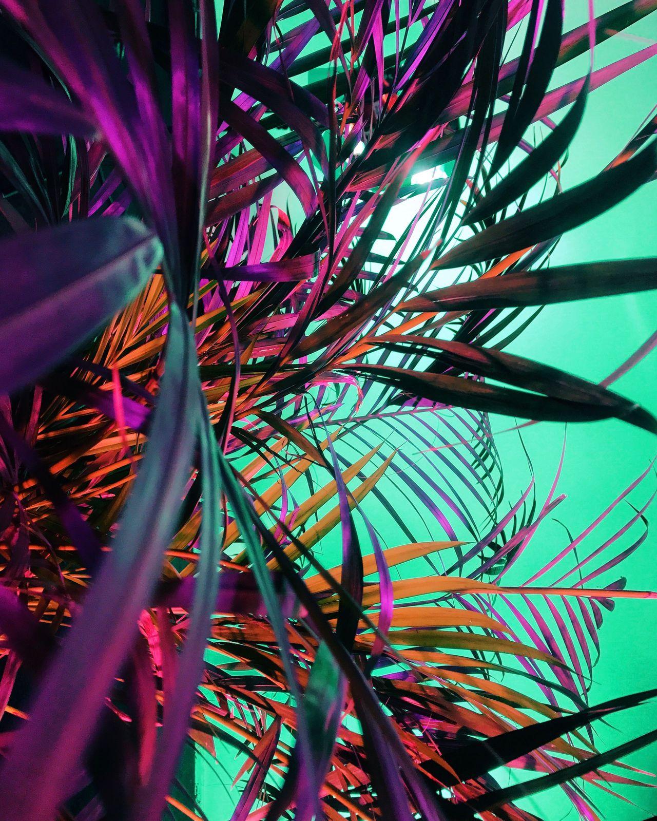 Jungle Plant Neon Still Life Studio Shoot Studio Shot Studio Photography Backgrounds Colorful