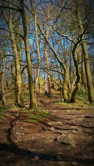 Beautiful wood First Eyeem Photo Nature England Magical Fantasy Magical Woods Magical Trees