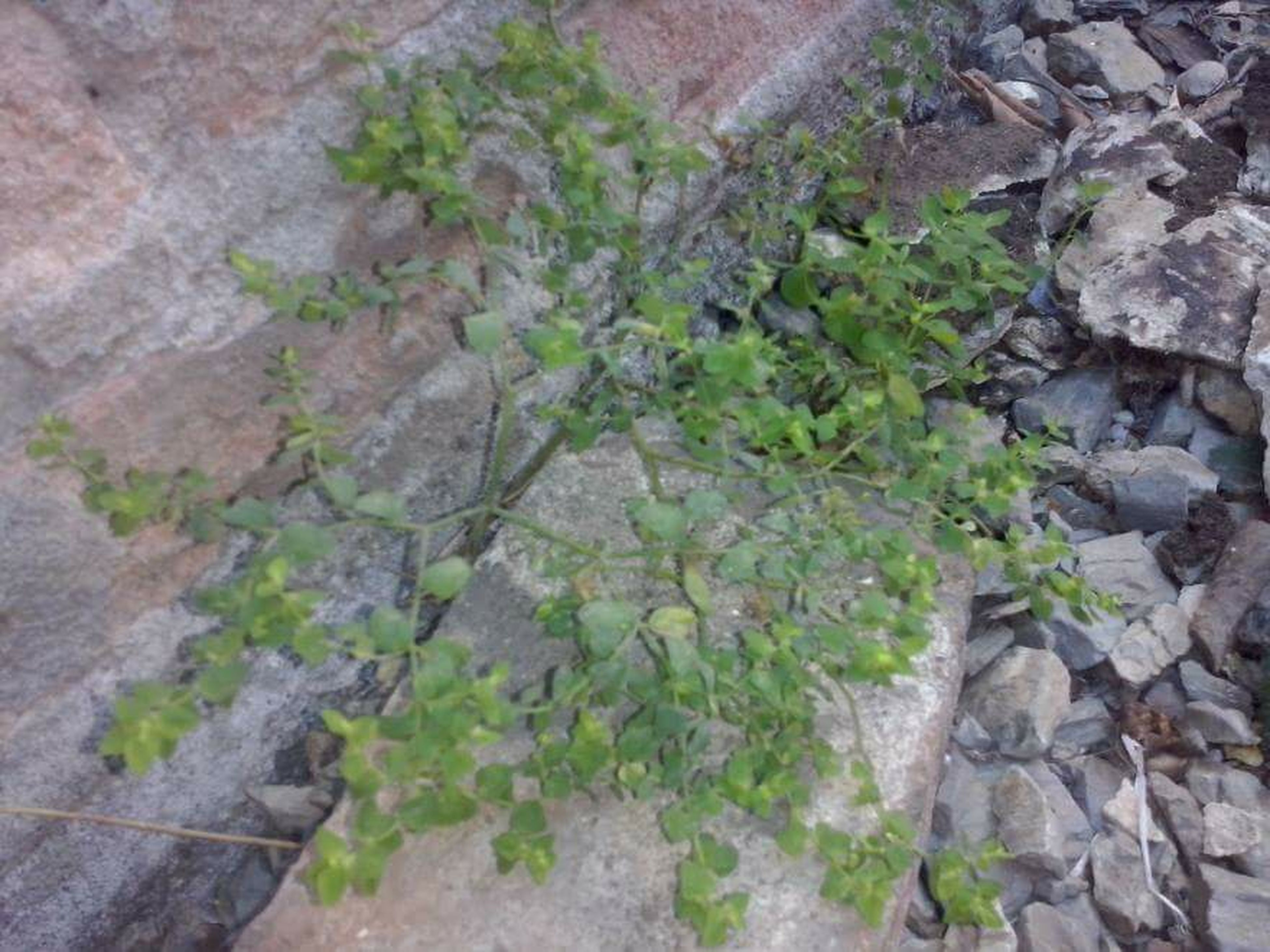 plant, growth, high angle view, leaf, wall - building feature, built structure, stone wall, ivy, nature, architecture, growing, rock - object, day, outdoors, green color, textured, no people, moss, brick wall, stone - object