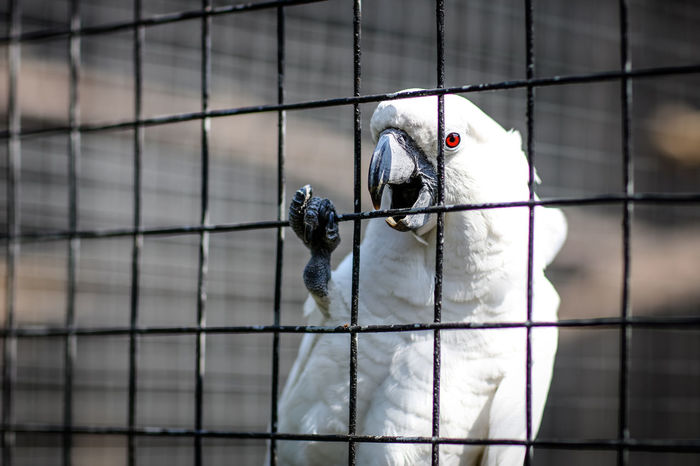 Bird cage Cockatoo Durban South Africa South Africa The Week On EyeEm White Cockatoo Beak Bird Cage Claw Day Help Letmeoutofhere Nature No People One Animal Outdoors Redeye Trapped Umgeni Bird Park Umgeni River Umgenibirdpark White