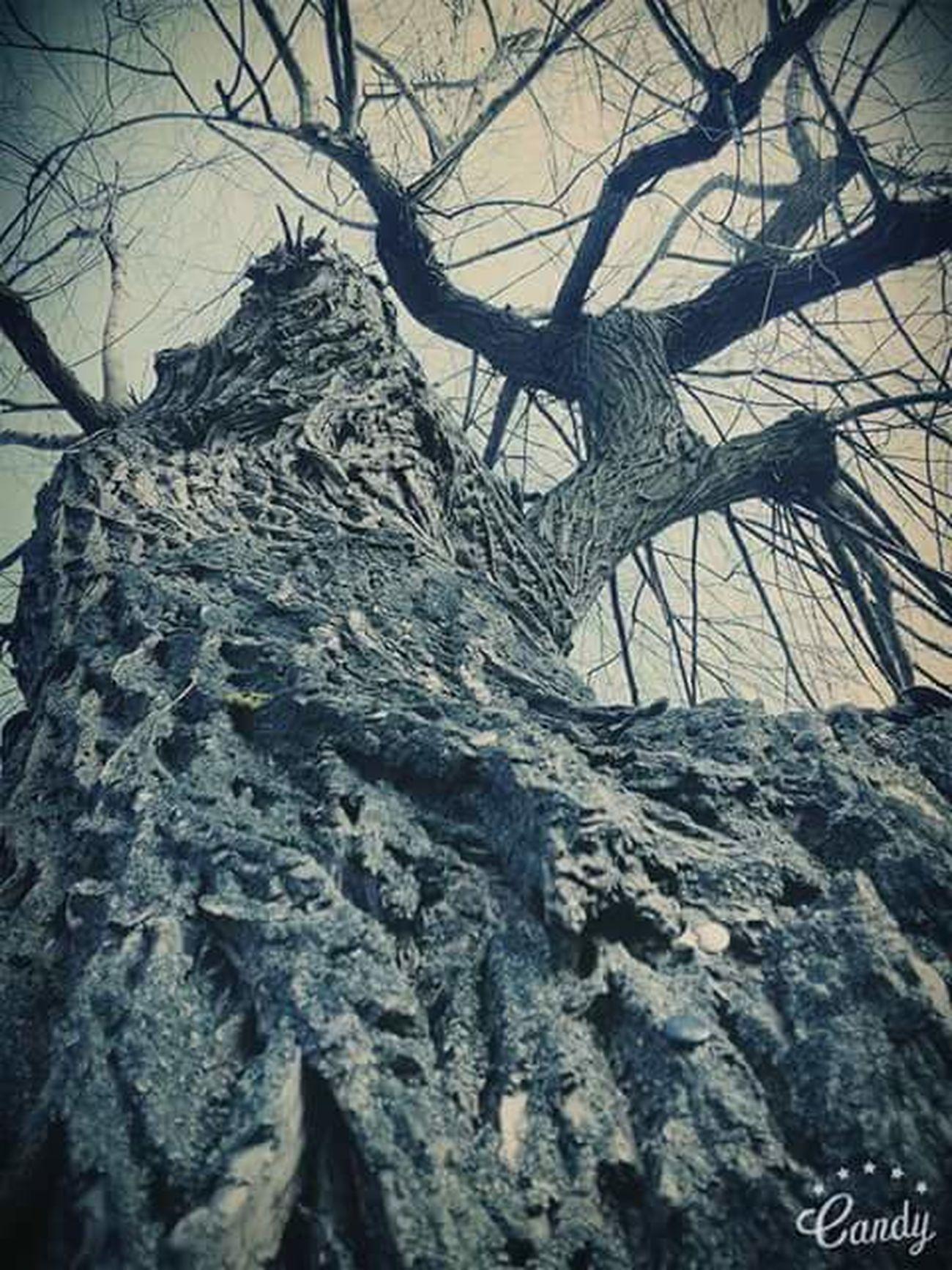 Drzewko Drzewo