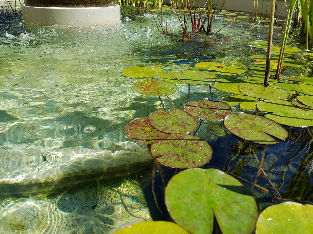 TakeoverContrast The Purist (no Edit, No Filter) Fountain Fine Art Photography Water Lilles Still Life Photography Tranquility Lily Pad Green Color Nature Day Water Floating On Water Reflection Contrast Tranquil Scene Freshness Beautiful Nature Natural Pattern Nature_collection Nature Photography Fountain Waterdrops Check This Out Meditation