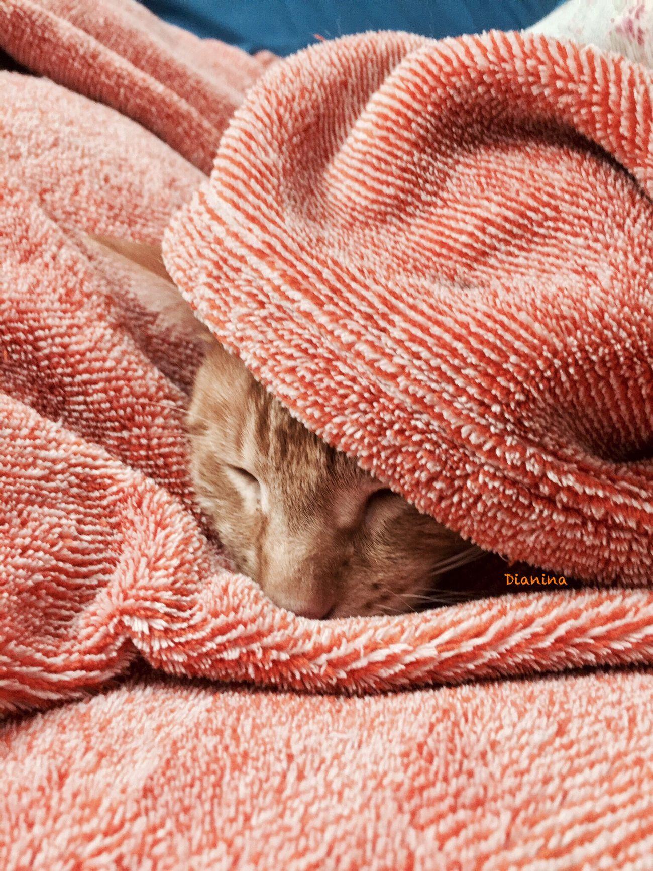 Orión! Mi amoroso gatito! Sleeping Relaxation NoEditNoFilter EyeEmBestPics Mypet Orion Cute Cute Pets Mylove