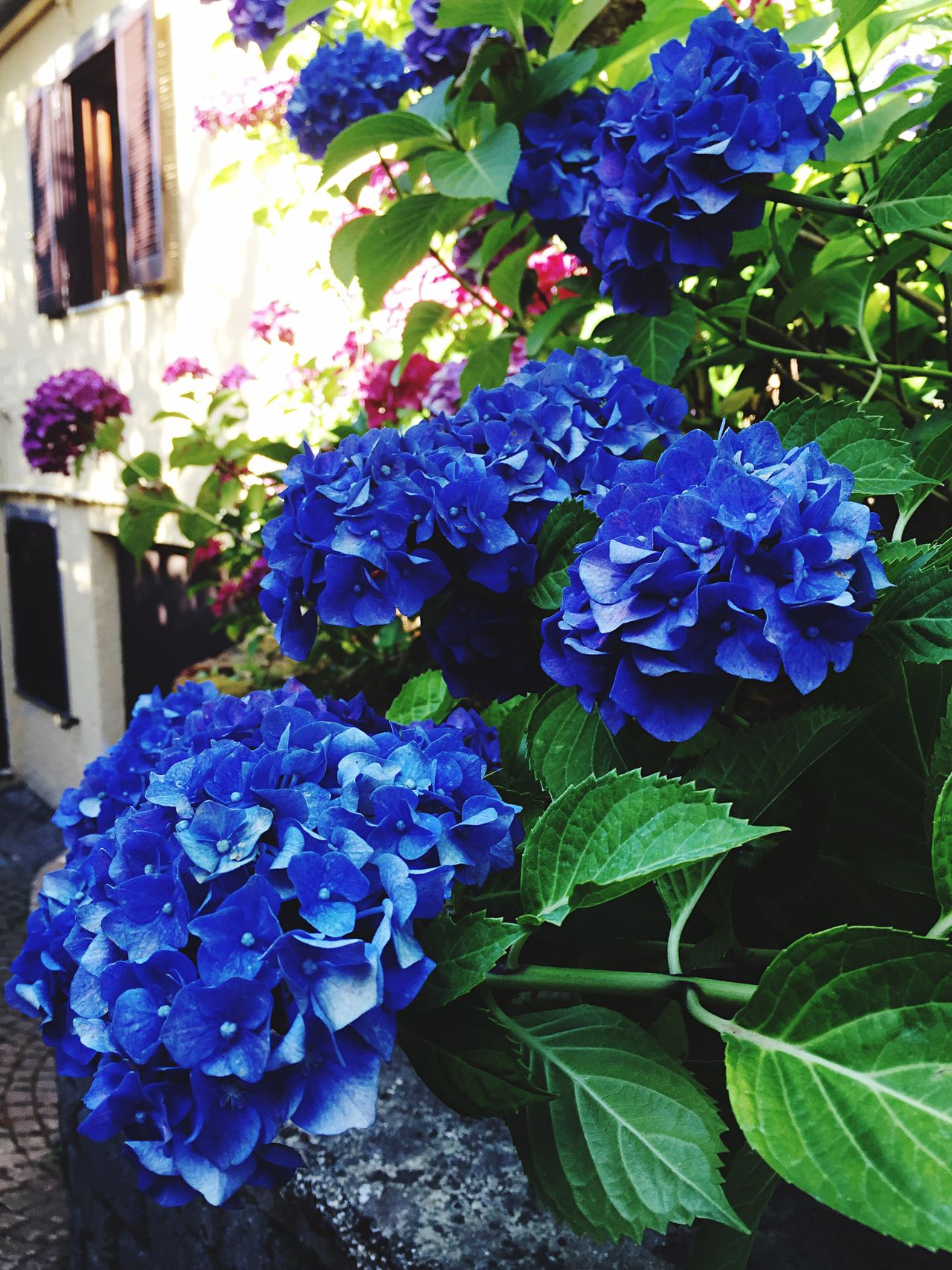 Ornate Nature Blue No People Day Flower Outdoors Beauty In Nature No People,