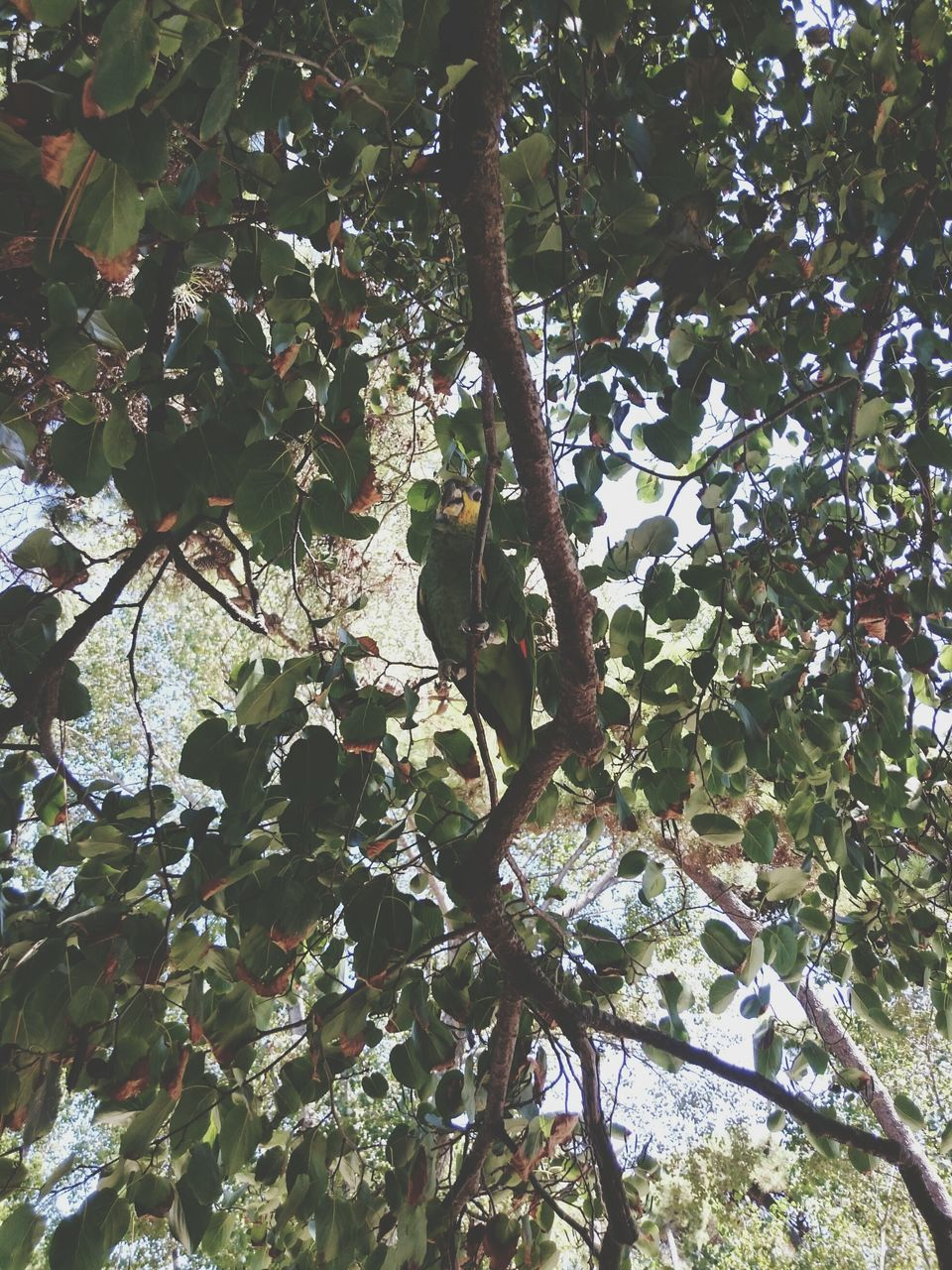 growth, tree, branch, nature, low angle view, leaf, beauty in nature, no people, day, outdoors, sunlight, fragility, freshness, flower, close-up