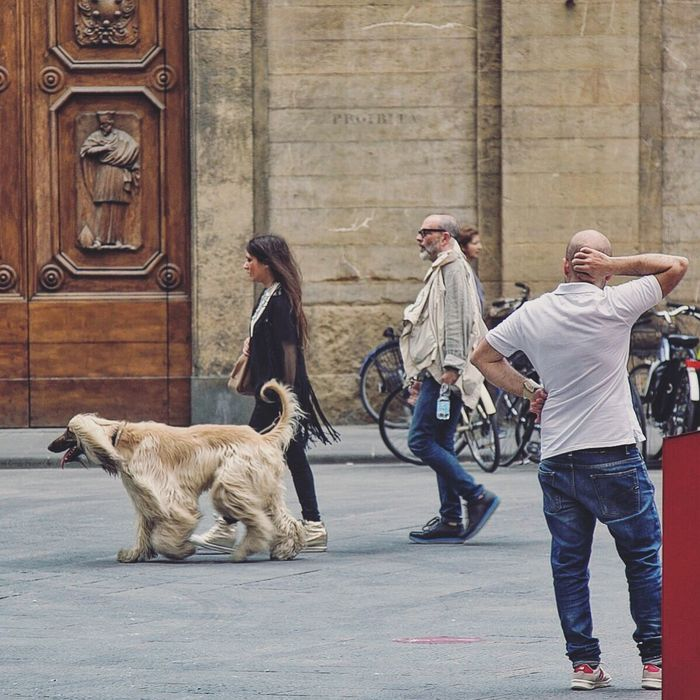 Moda Afghan Hound Firenze Tuscany Street Photography Street Firenze With Love Architecture Love Story Book Cover Style Fashion Hair Blonde Hair Lifestyles City European  What Pet City Life Travel Photography Travel Destinations Gillian McBain Photographer Canon Character VSCO