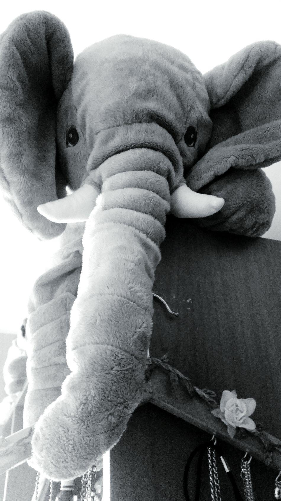 Lovely Elephant ♥ Pupazzi Morbidezza So Sweet ♥ Occhi Dolci Animals
