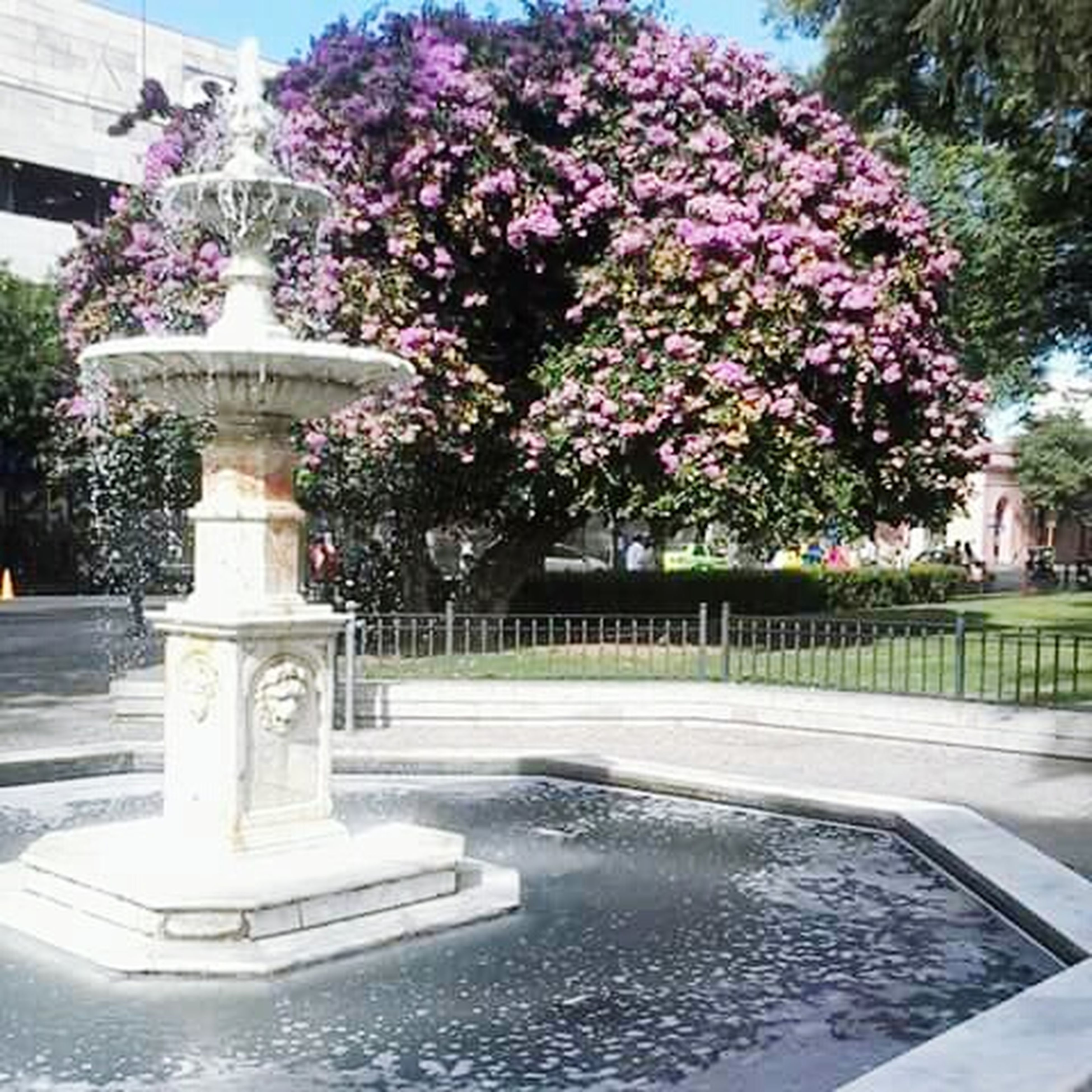 tree, flower, built structure, architecture, building exterior, growth, park - man made space, day, formal garden, plant, incidental people, outdoors, city, nature, water, sunlight, freshness, no people, fountain, street