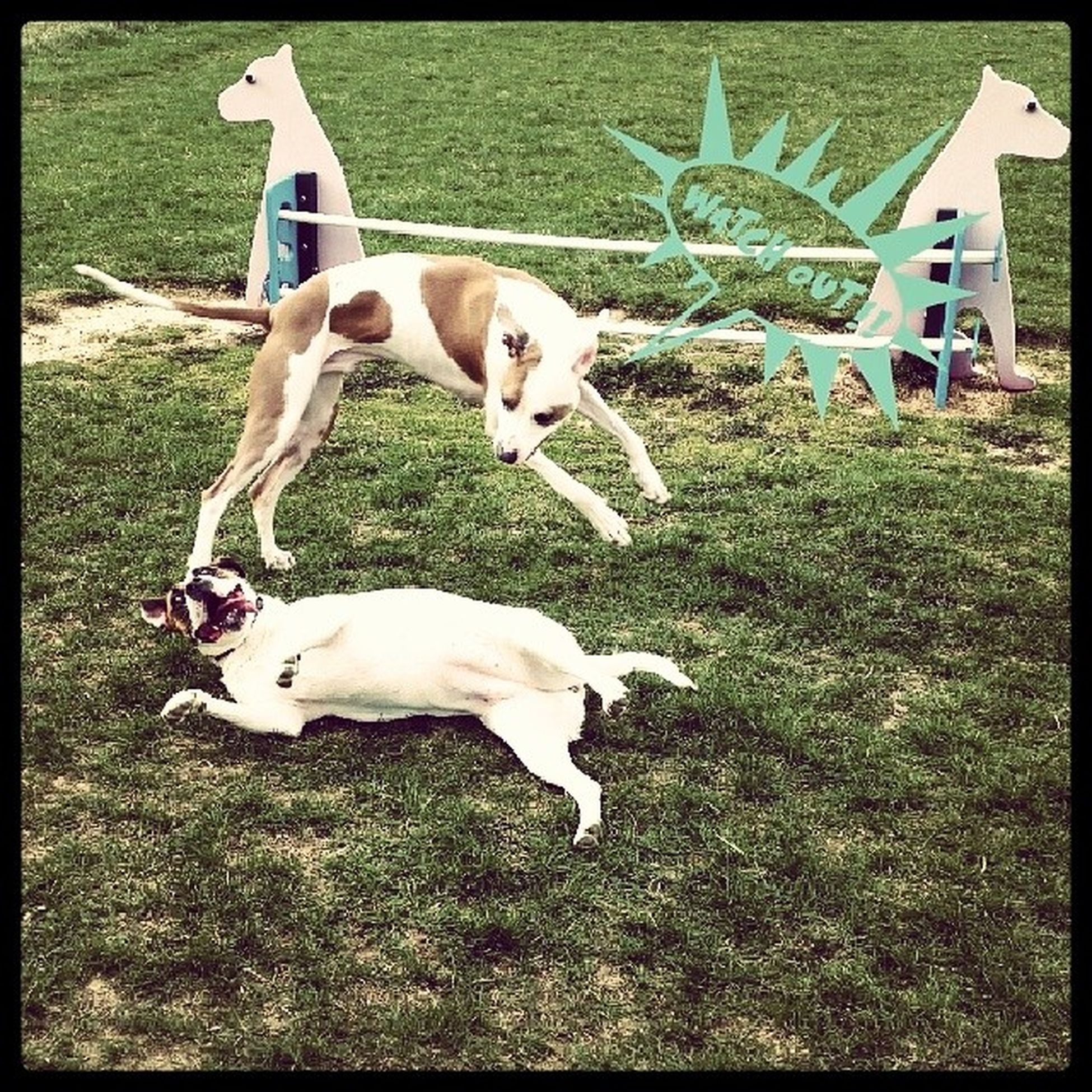 Misscharlie and Mrmitch enjoy a day at the Dogpark .