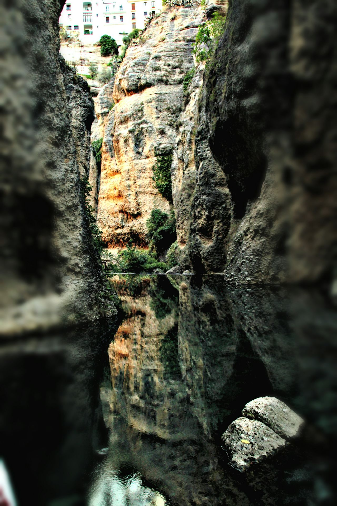 Nature Close-up Day Growth Outdoors No People Backgrounds Beauty In Nature Tranquility Ronda Spain Ronda, Malaga Ronda Houses Focus On Background Cliffs And Water Cliff Face Reflections In The Water Reflection In The Water Travel EyeEm Gallery Check This Out