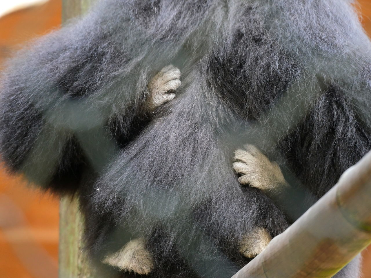 Animal Body Part Animal Hair Animals Hands Hold On Tight Monkey Neighborhood New Life No People Offspring Outdoors Thinks I Like Young Animal Zoology From My Point Of View Taking Photos Animal Themes Monkeys Security