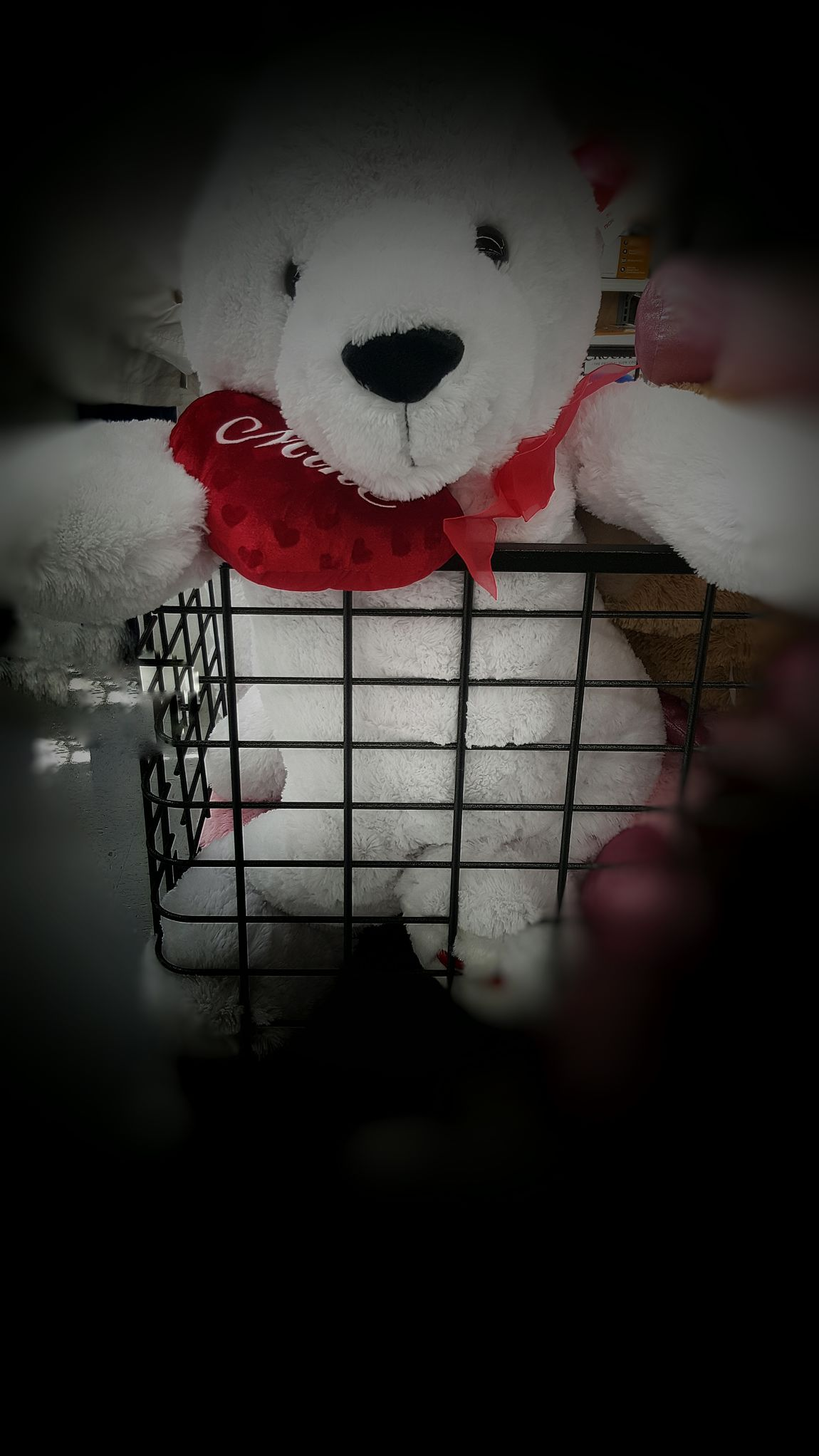 Showcase: February Teddy Bear 🐻 Animal Curtly Save The Teddy Bears Freedom! Caged Animals Caged Stuffed Toys Help Me !! Smile❤ Animal Photography Animal_collection Pets Of Eyeem Valentines Day Is Coming Love Is In The Air Buying A Gift
