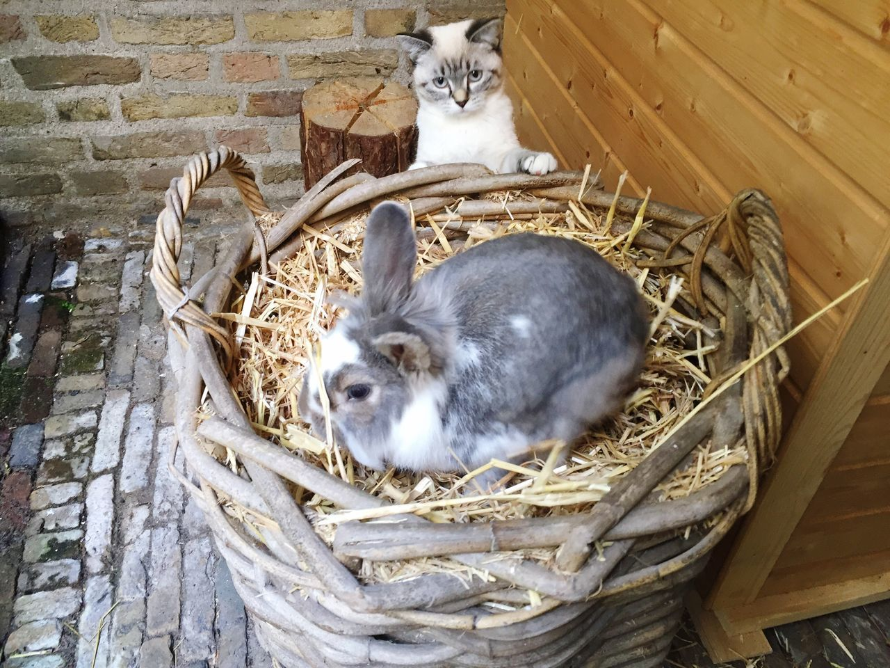 Cat and Rabbit game. Domestic Cat Pets Domestic Animals Animal Themes Cat Bunnie Outdoors Cats Of EyeEm Cats Cat Lovers Cat♡ Rabbit Rabbit ❤️ Rabbit Rabbits 🐇