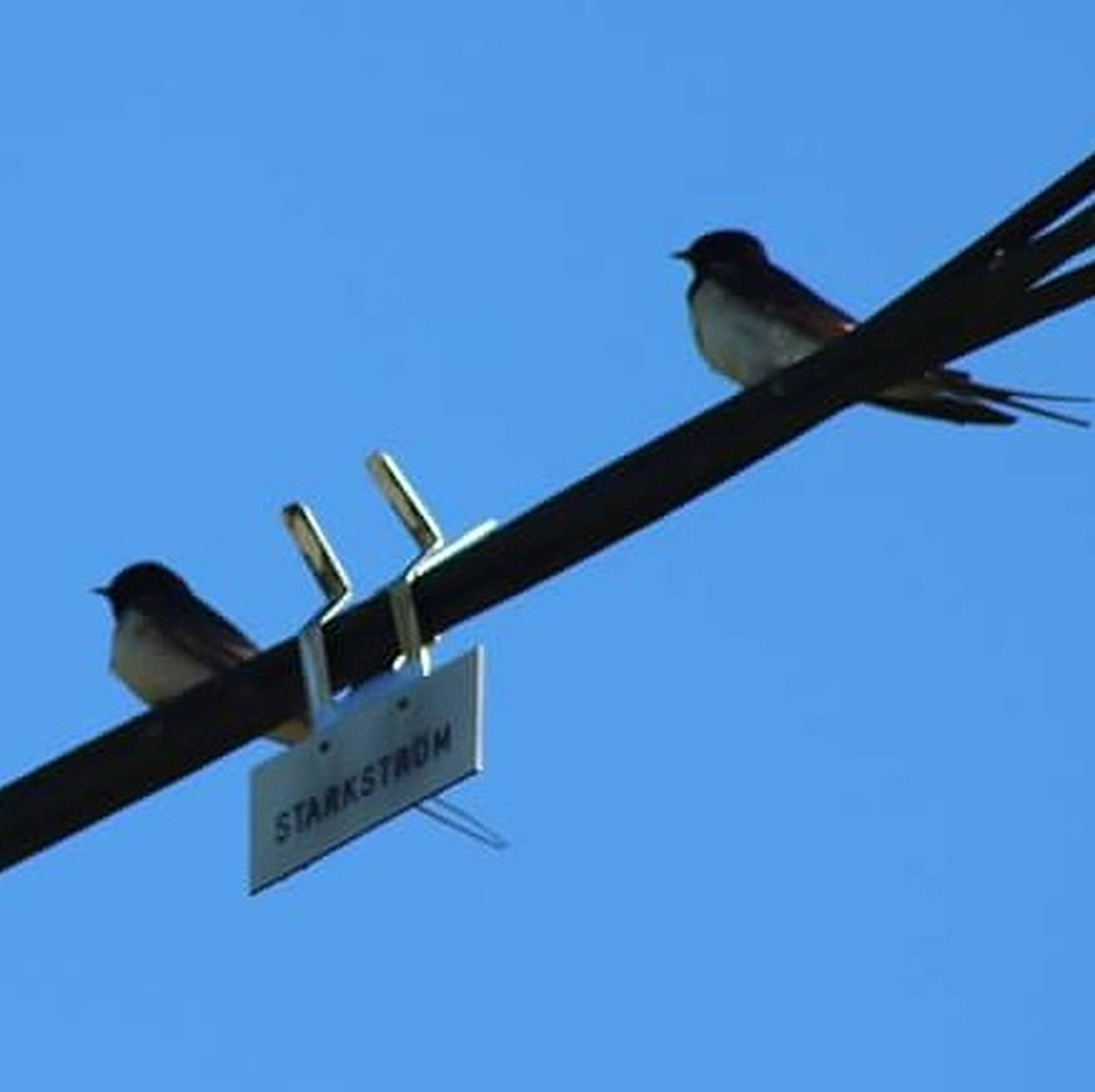 low angle view, guidance, animal themes, blue, direction, bird, clear sky, animal wildlife, animals in the wild, no people, day, outdoors, road sign, one animal, perching, stoplight, sky, raven - bird, close-up