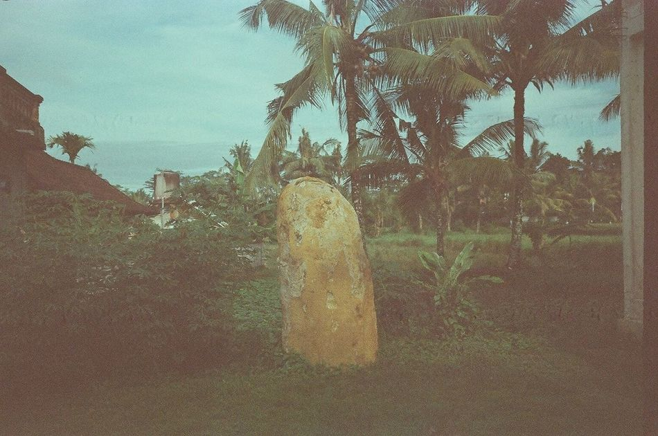 35mm Film Analogue Photography Bali Bali, Indonesia Coconut Trees Contemporary Photography Copy Space Day Expired Film Film Photography Filmisnotdead Growth INDONESIA Indonesia_photography Kodak Monolith Nature New Topographics No People Outdoors Palm Trees Rock Sky Tree Tropical