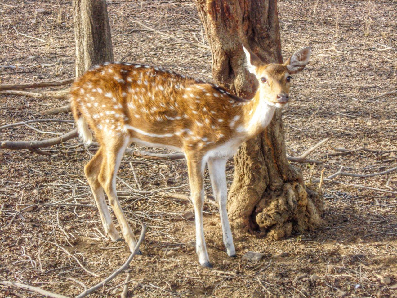 Deer Standing By Tree In Field