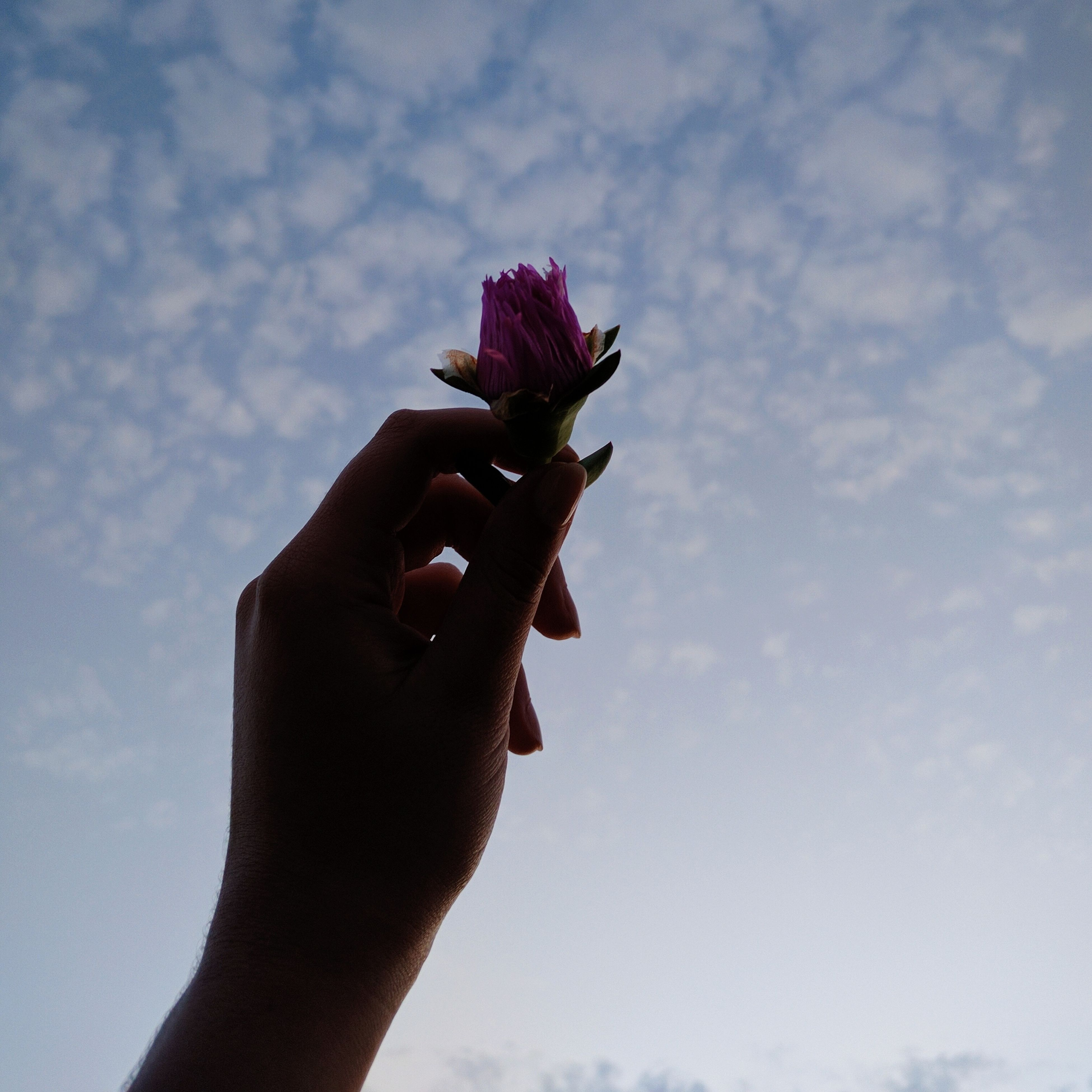 sky, human hand, low angle view, one person, personal perspective, outdoors, human body part, cloud - sky, day, real people, close-up, nature