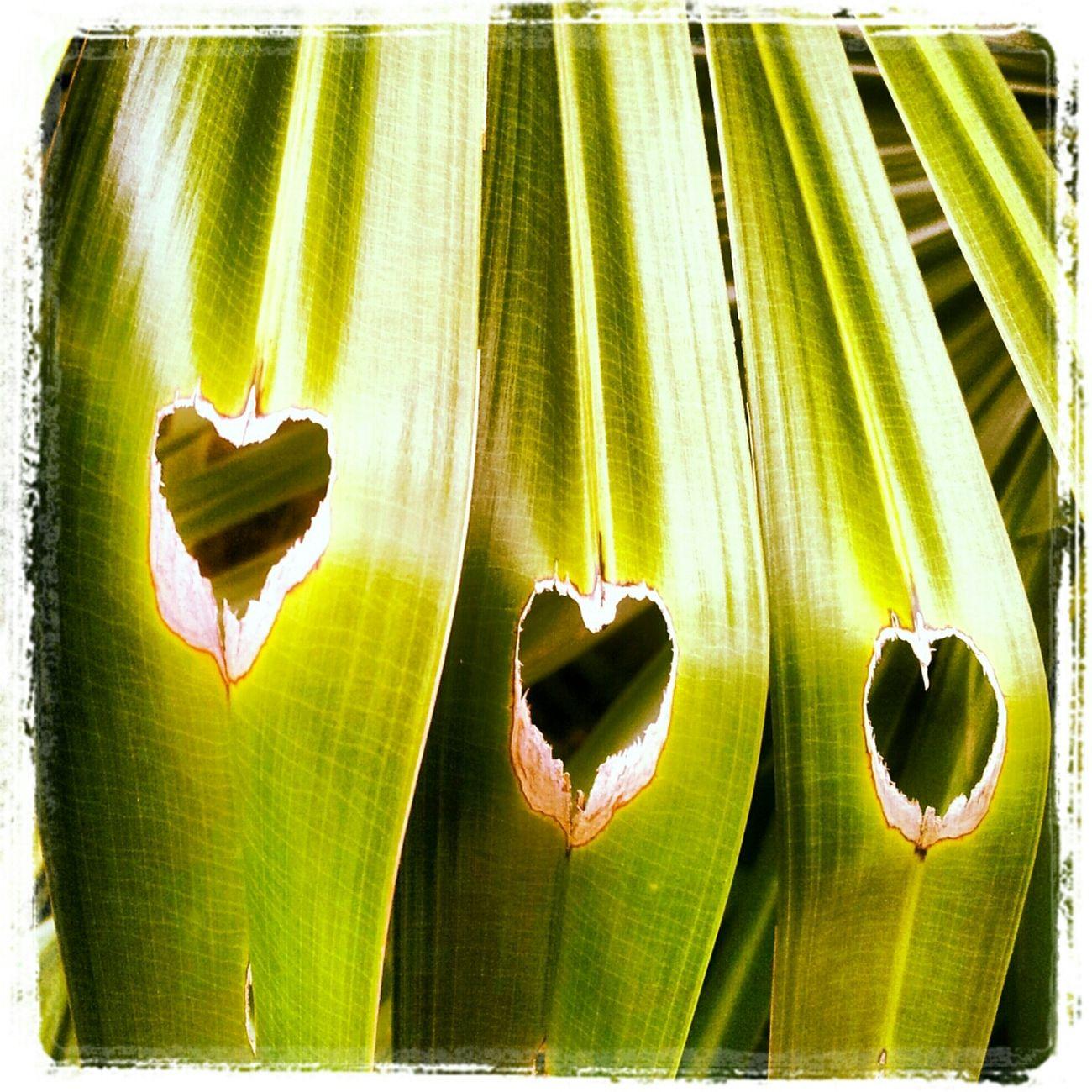 @nature @love @earth