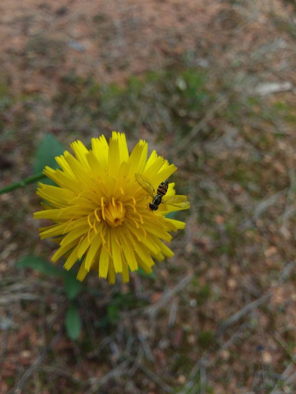 EyeEm Nature Lover My Back Yard Blooms Flowers