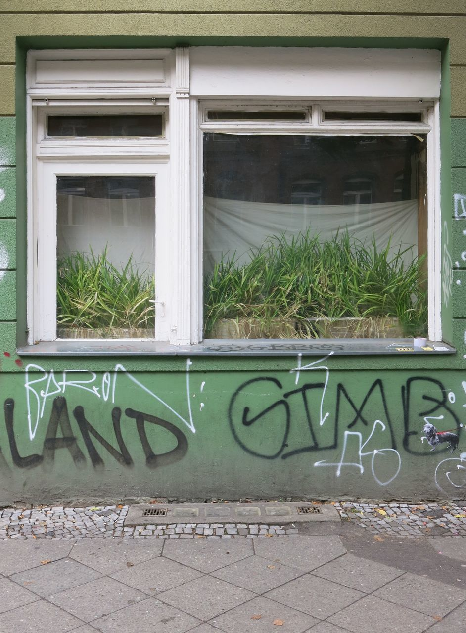 window, building exterior, architecture, plant, outdoors, built structure, day, growth, text, no people, green color, nature, close-up