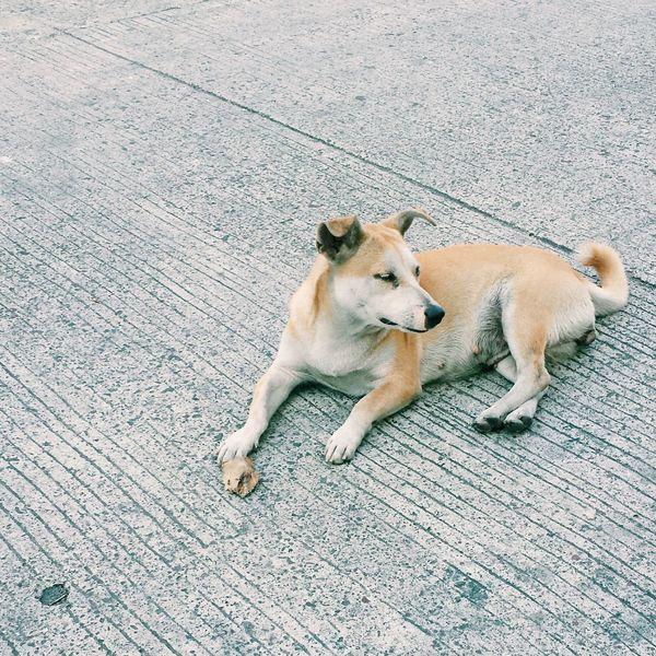 Deceptively Simple Dog Stolen Nature