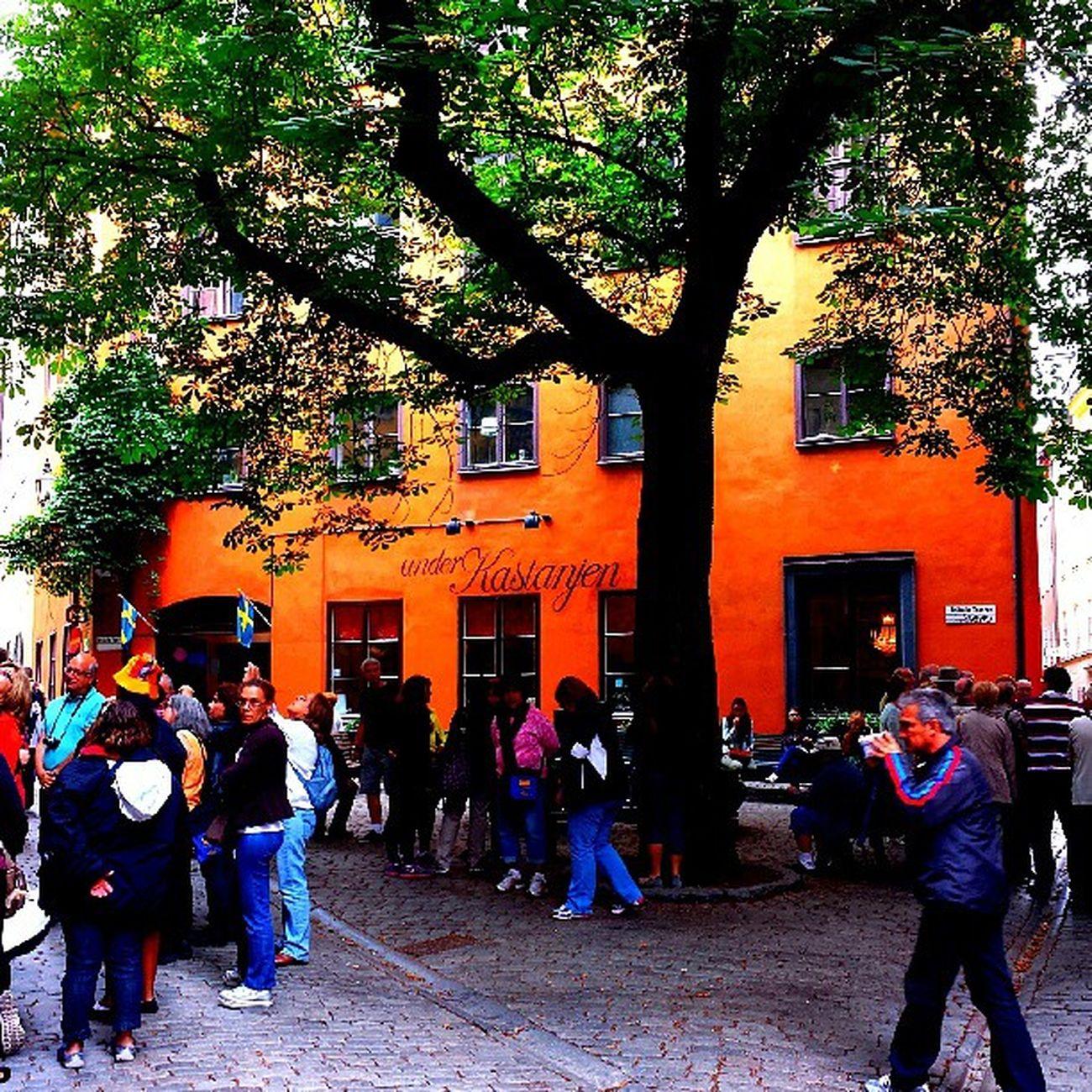 Stockhom Gamlastan Tr äd Folk turist summer sommar semester