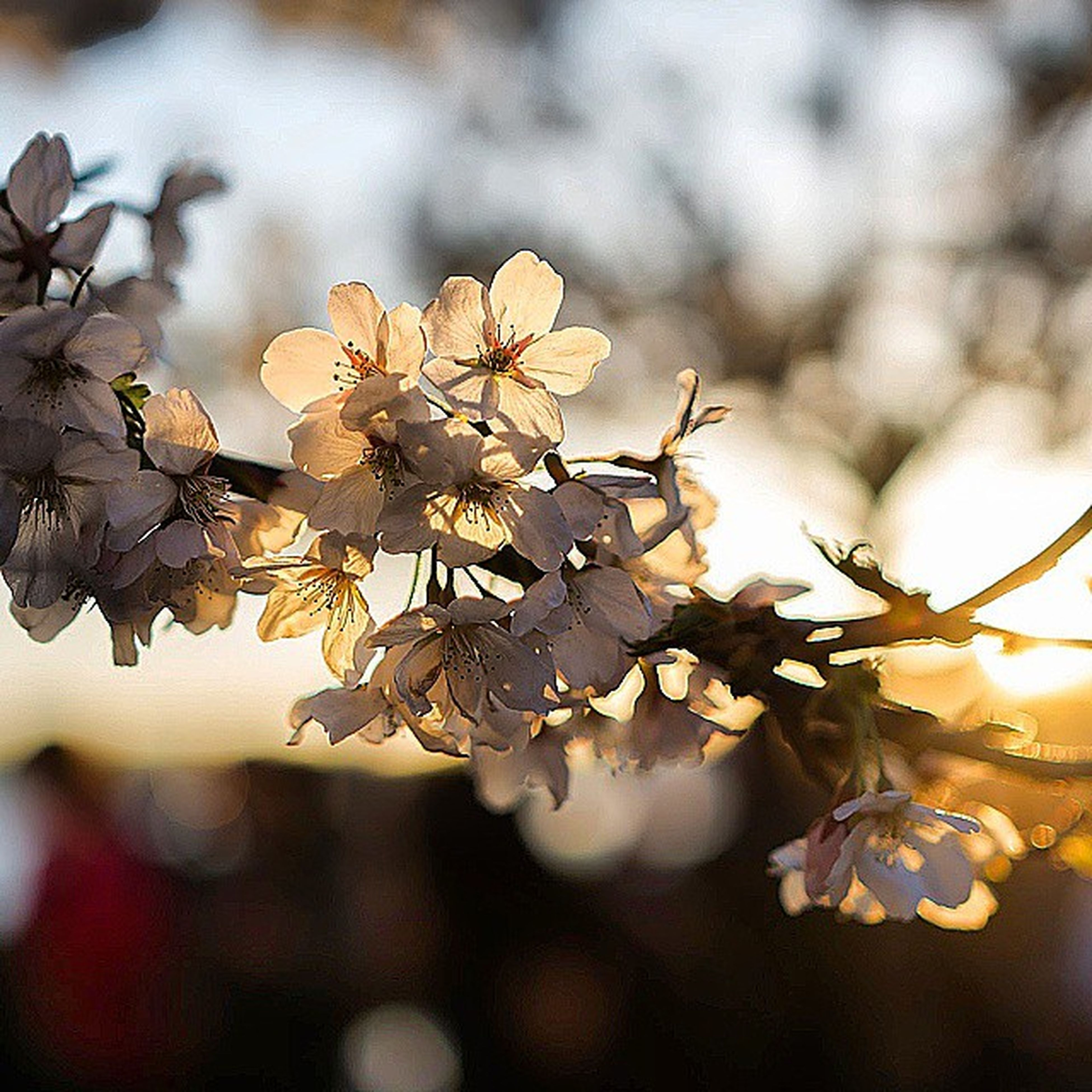 branch, growth, focus on foreground, nature, twig, close-up, flower, leaf, beauty in nature, freshness, fragility, tree, season, selective focus, plant, outdoors, botany, no people, day, tranquility