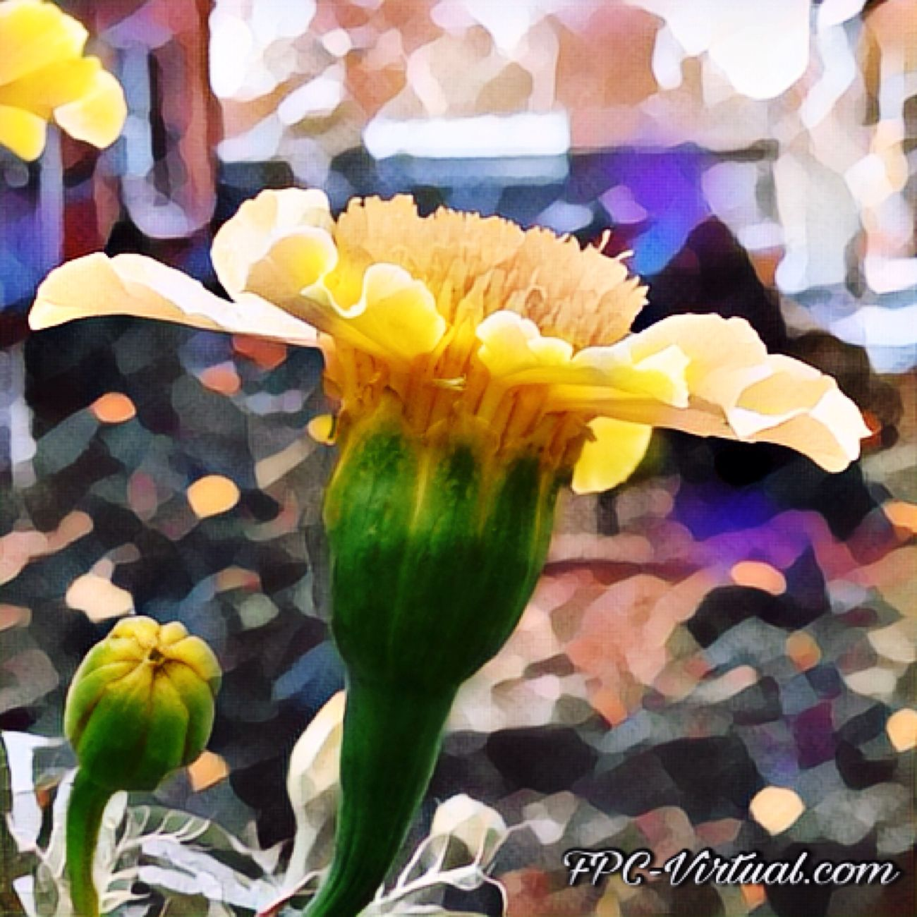 Love comes in many forms Flower Yellow Flower Head Beauty In Nature Close-up Photography Picsart