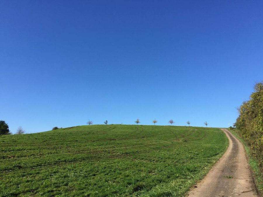 Blue Clear Sky Copy Space Tranquil Scene Field Nature Day Landscape Green Color Tranquility Beauty In Nature Scenics No People Grass Outdoors Growth Tree Sky