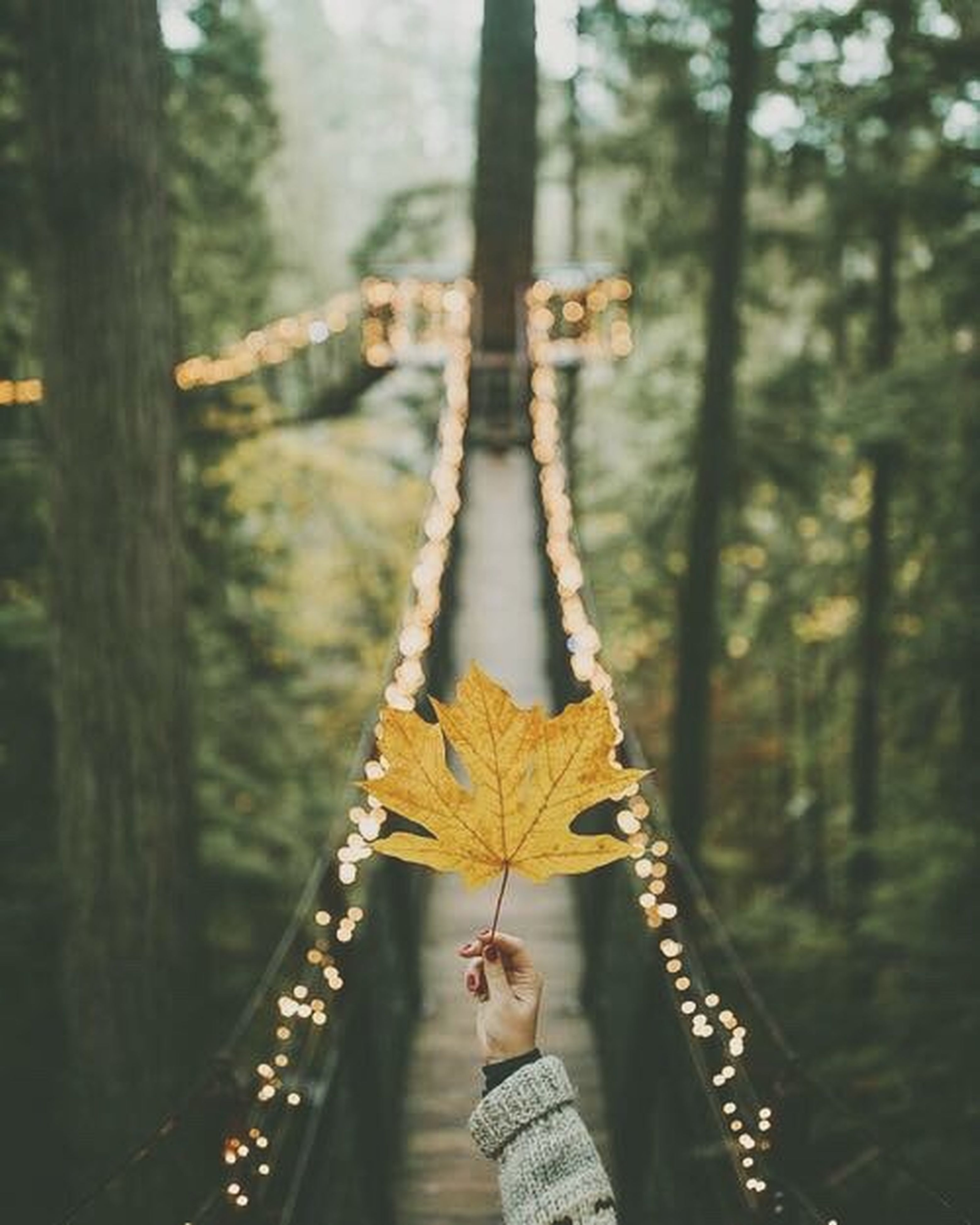 tree, forest, hanging, landscape, outdoors, branch, nature, day, no people