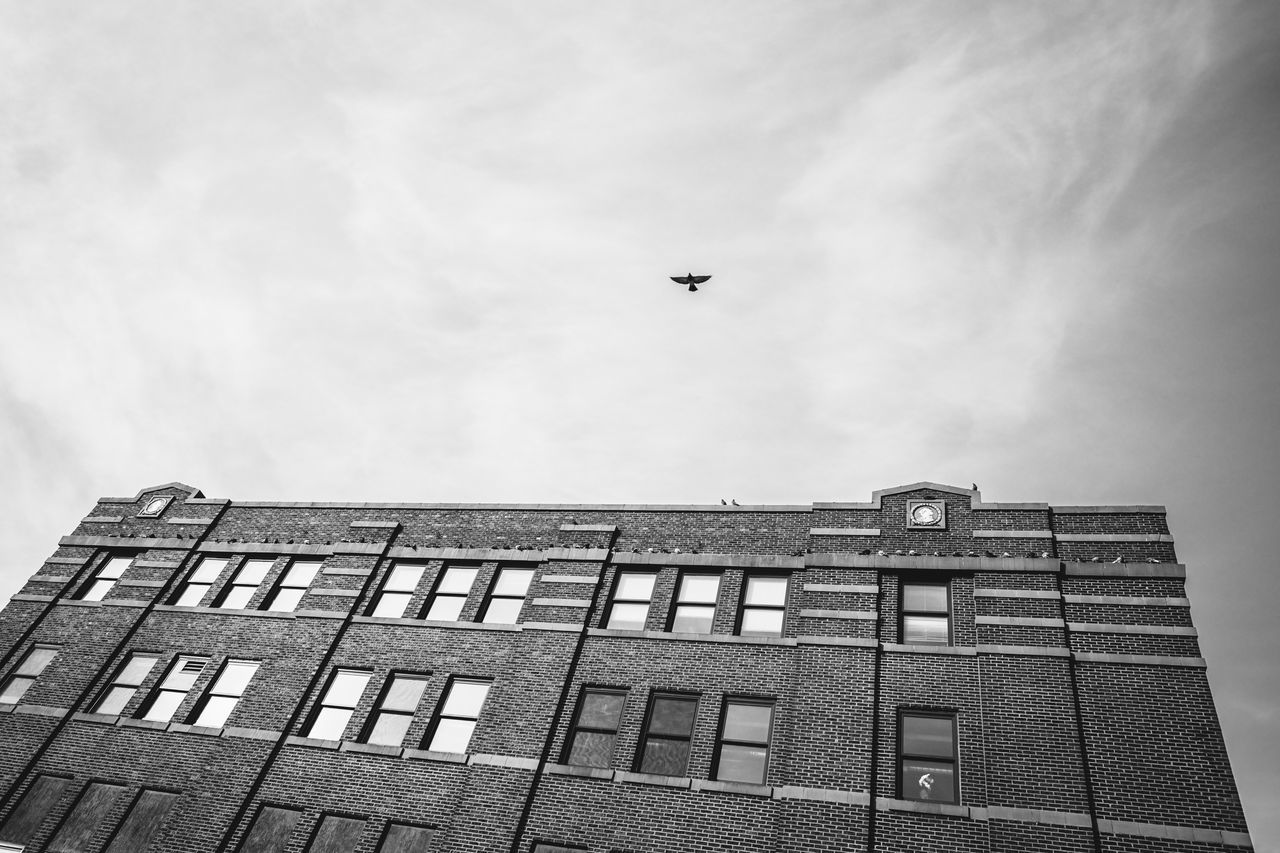 Angled Architecture Bird Flying Black And White Cloud Exterior High Up Above Low Angle View No People Outdoors Sky